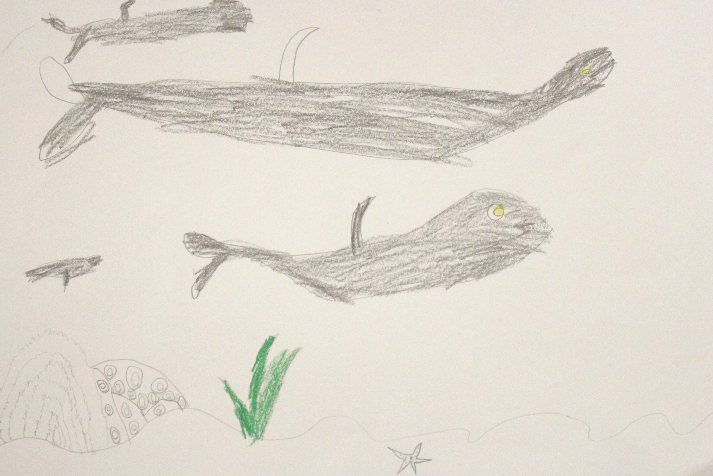First Grade: Tyler Drey (Sharkabet Sharks: Work in Progress)