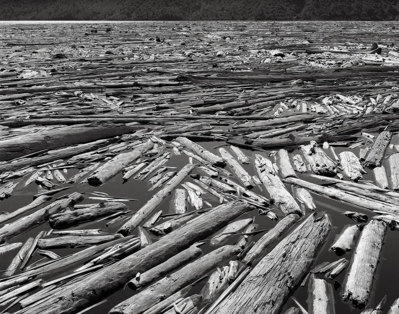 Dead Trees, Spirit Lake, Mount St. Helens