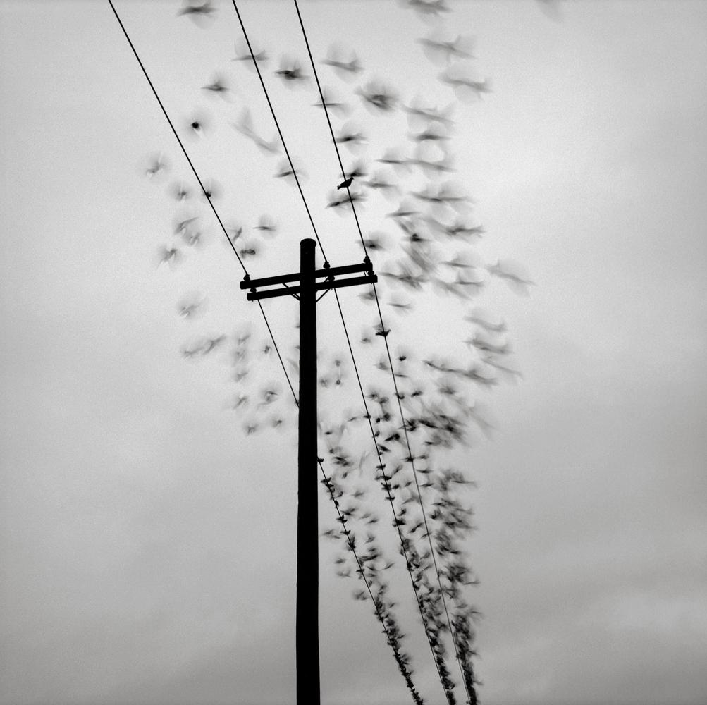 Telephone Pole with Birds, Portland