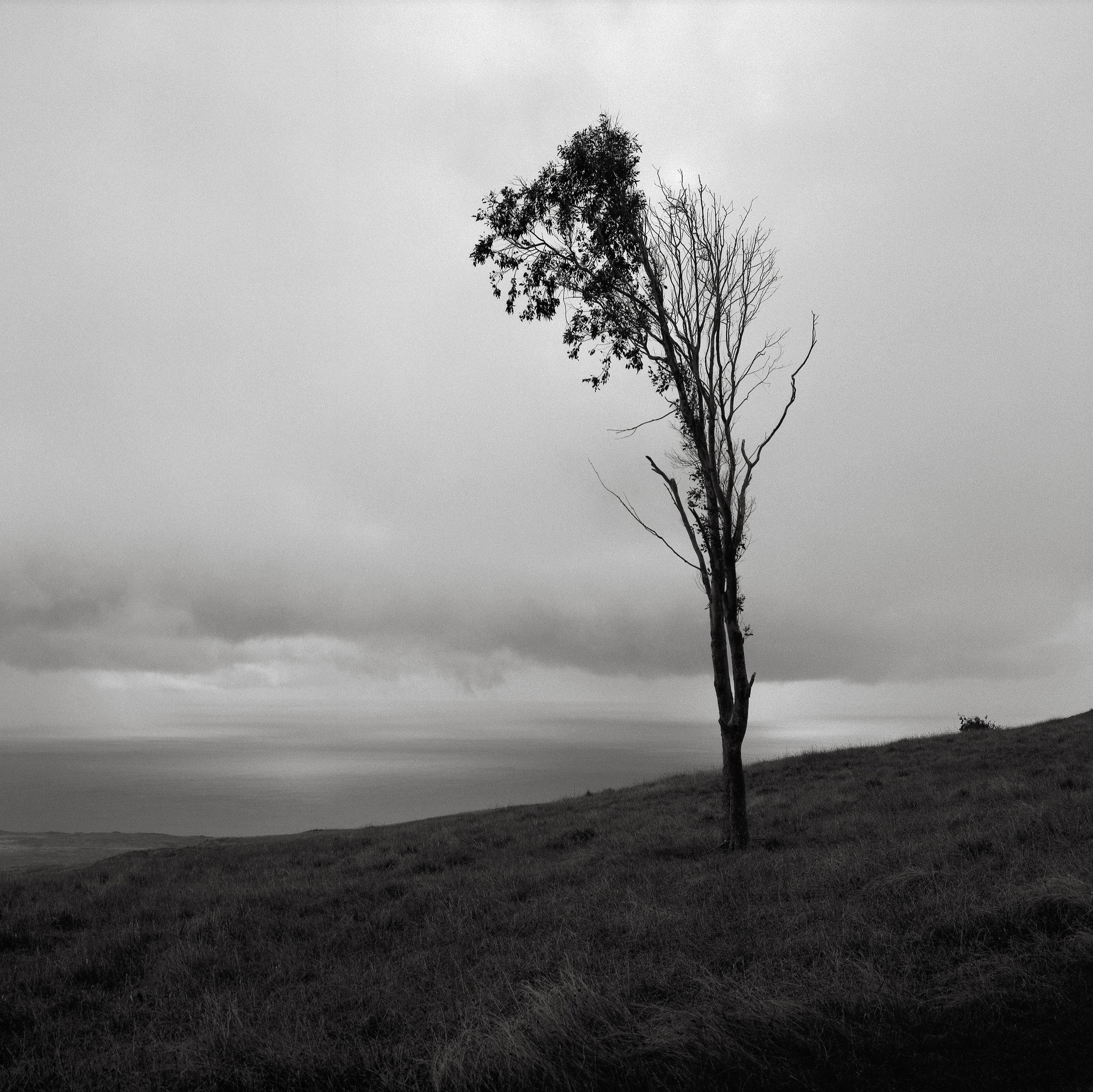 Lone Tree, Maunga Terevaka, Easter Island