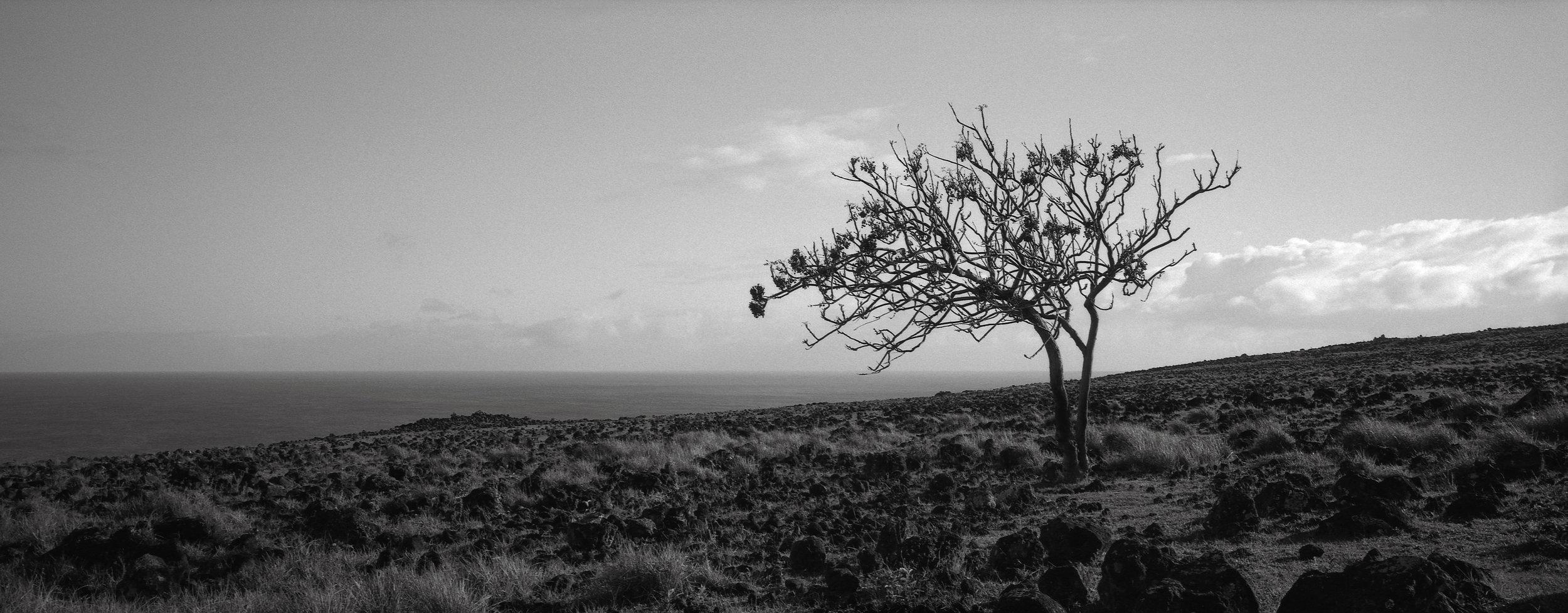 Lone Tree, Easter Island