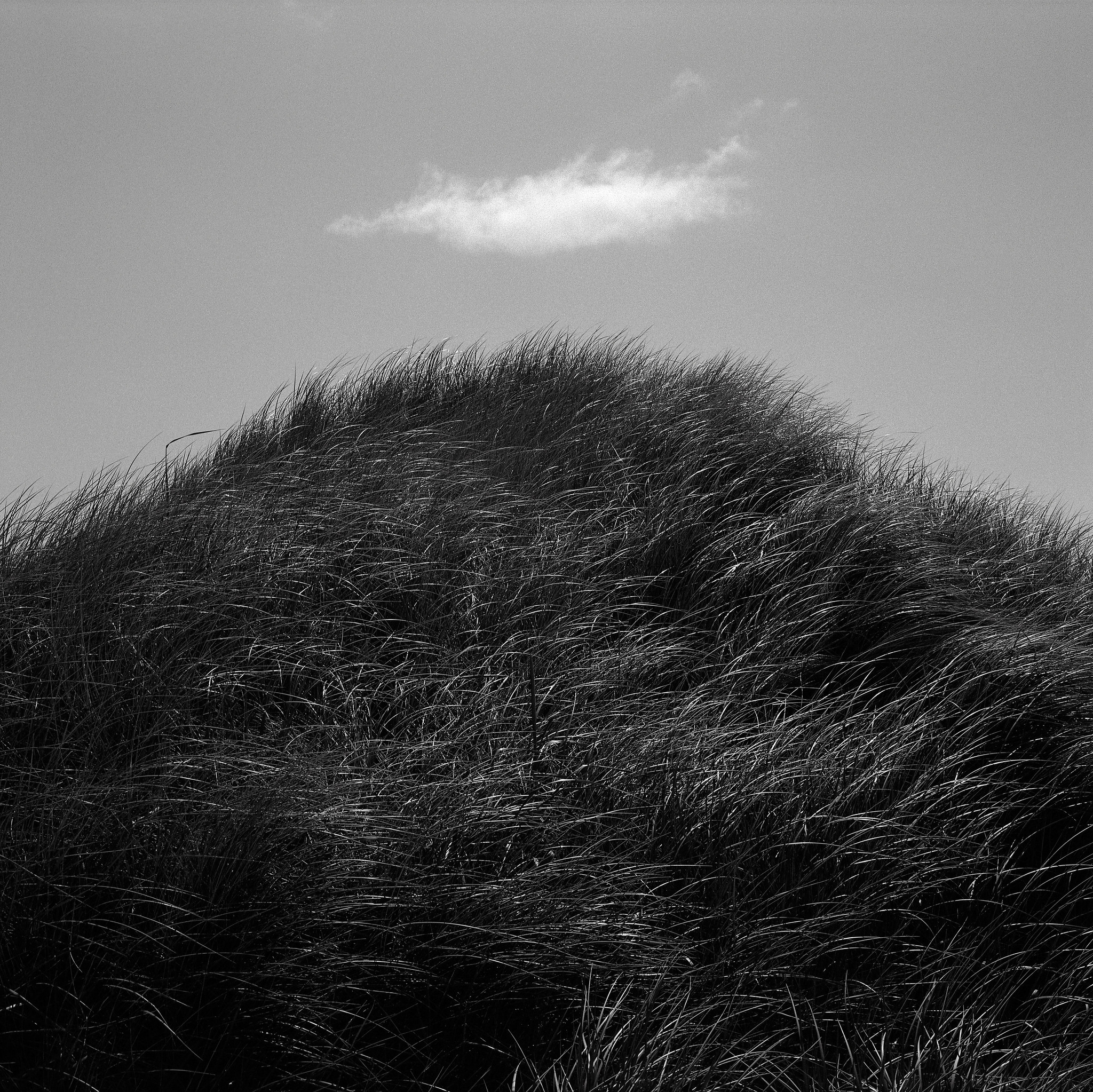 Dune Grass and Cloud, Oregon Coast