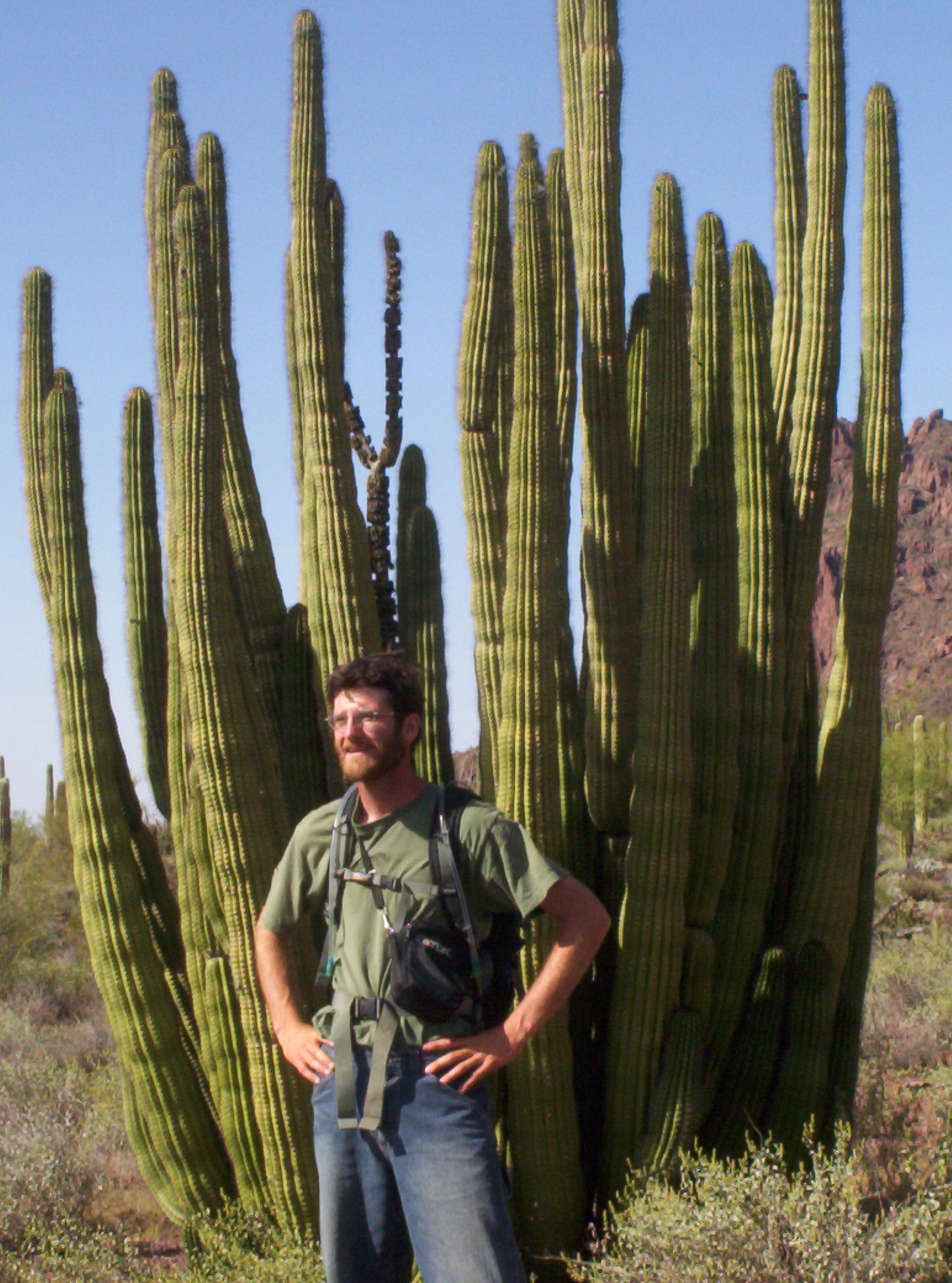 An Organ Pipe Cactus. Photo Credit:  Robb Hannawacker