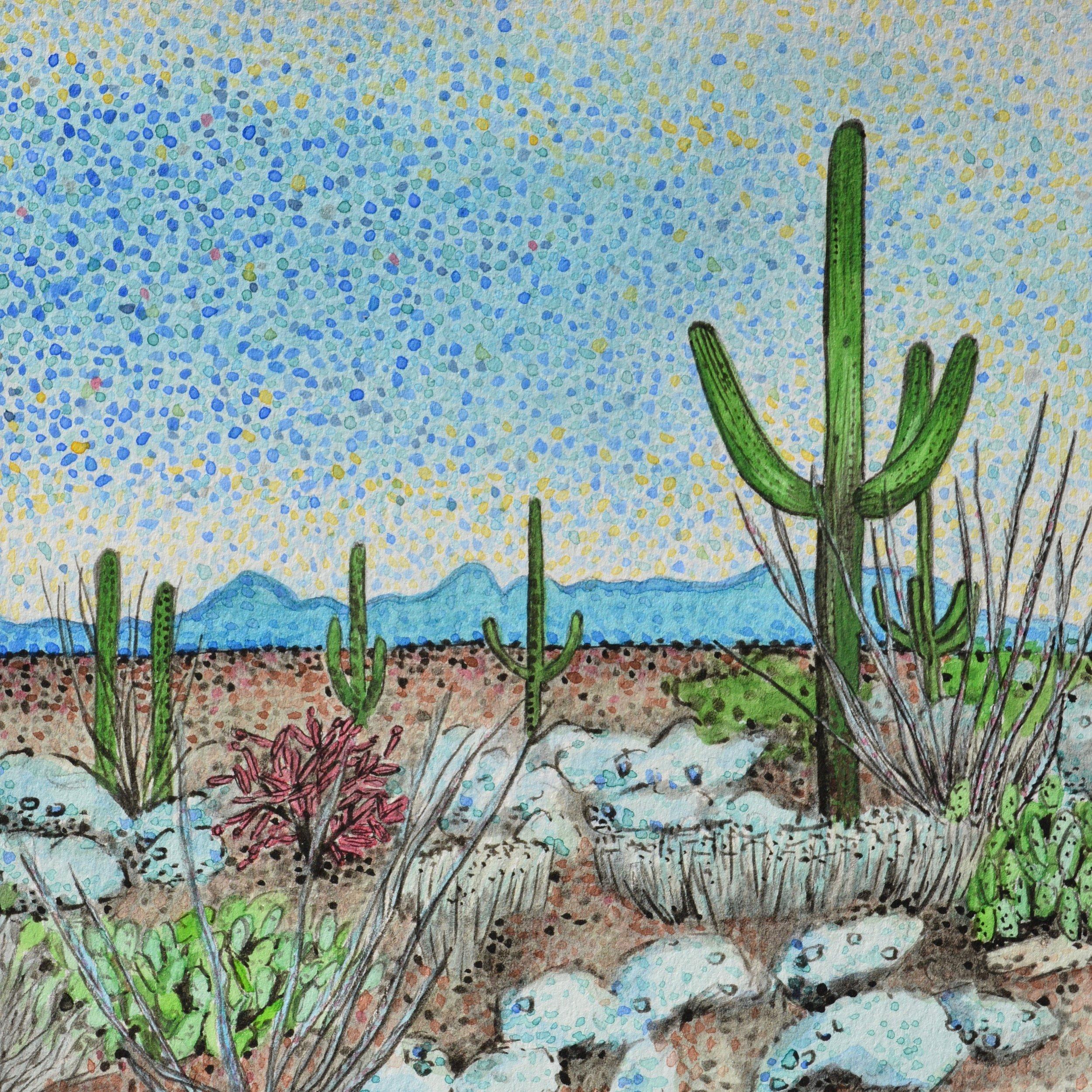Saguaro National Park, Arizona: 1/19/17, 13:43:40