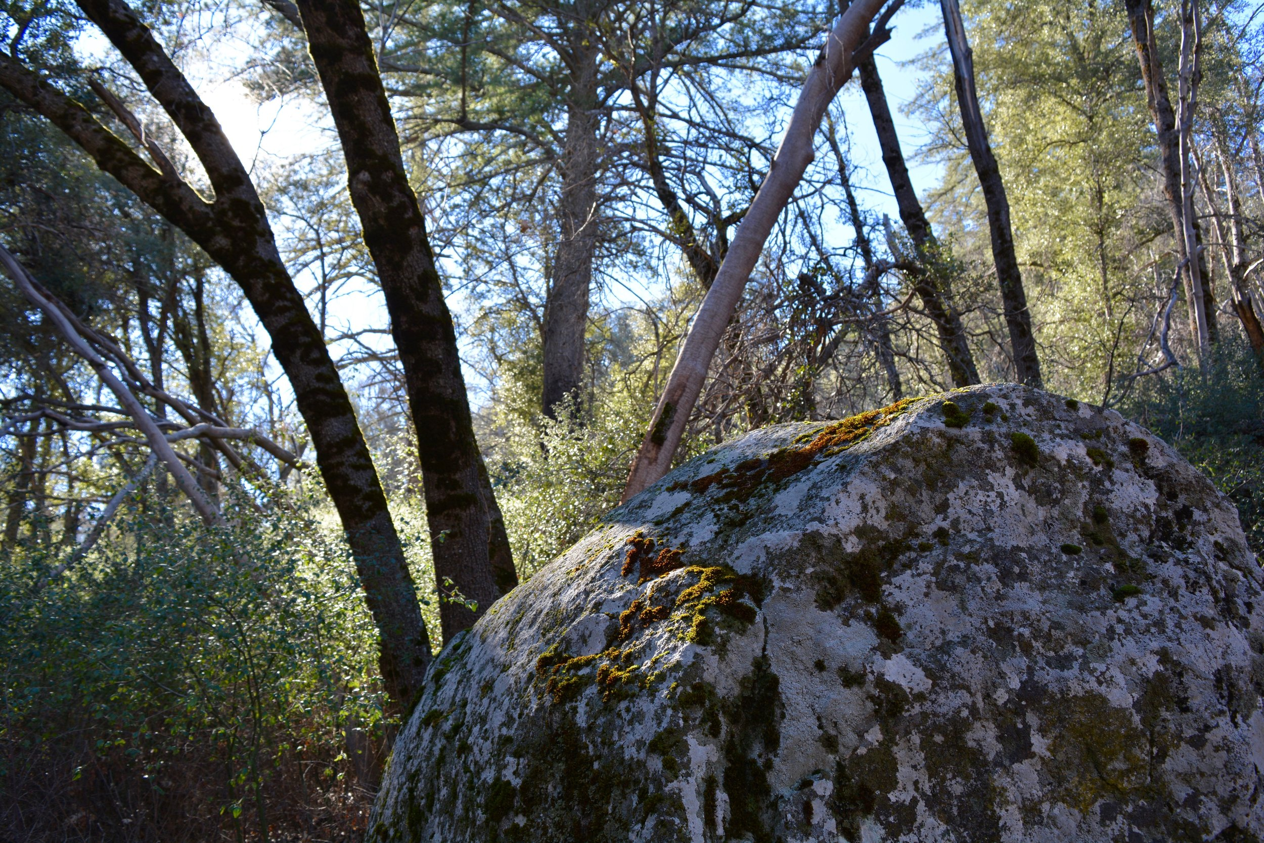 Boulder at Palomar Mountain