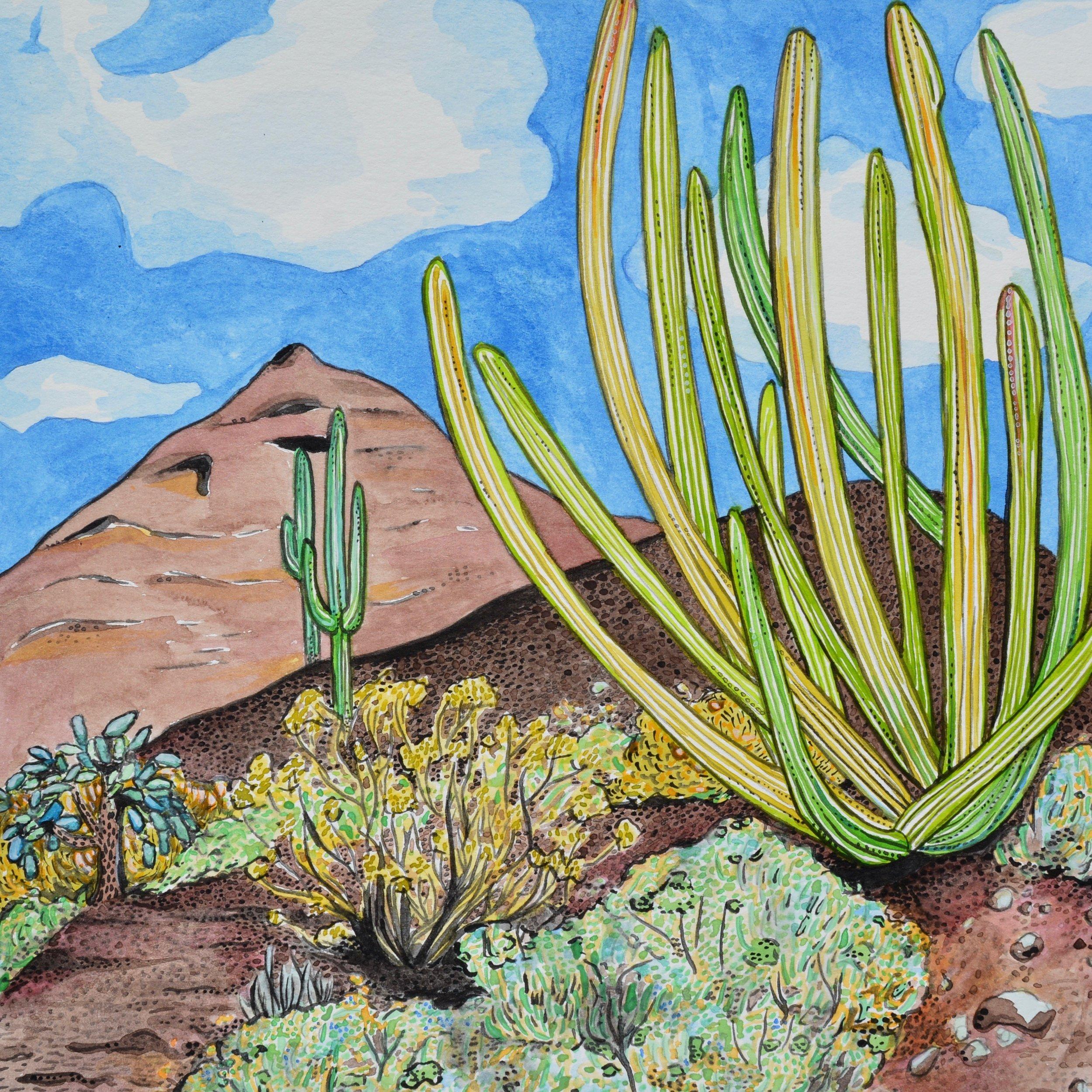 Organ Pipe Cactus National Monument, Arizona: 1/24/17, 13:06:55