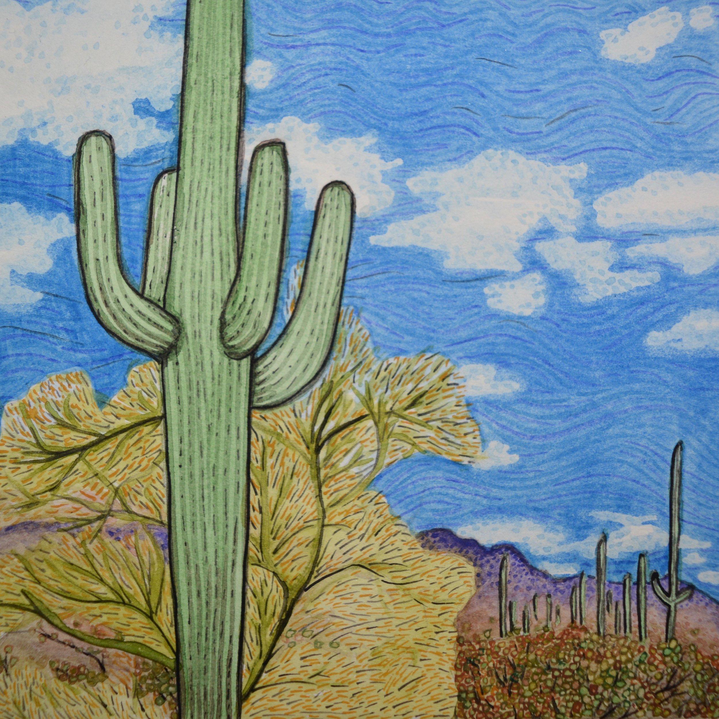 Organ Pipe Cactus National Monument, Arizona: 1/24/17, 16:57:46