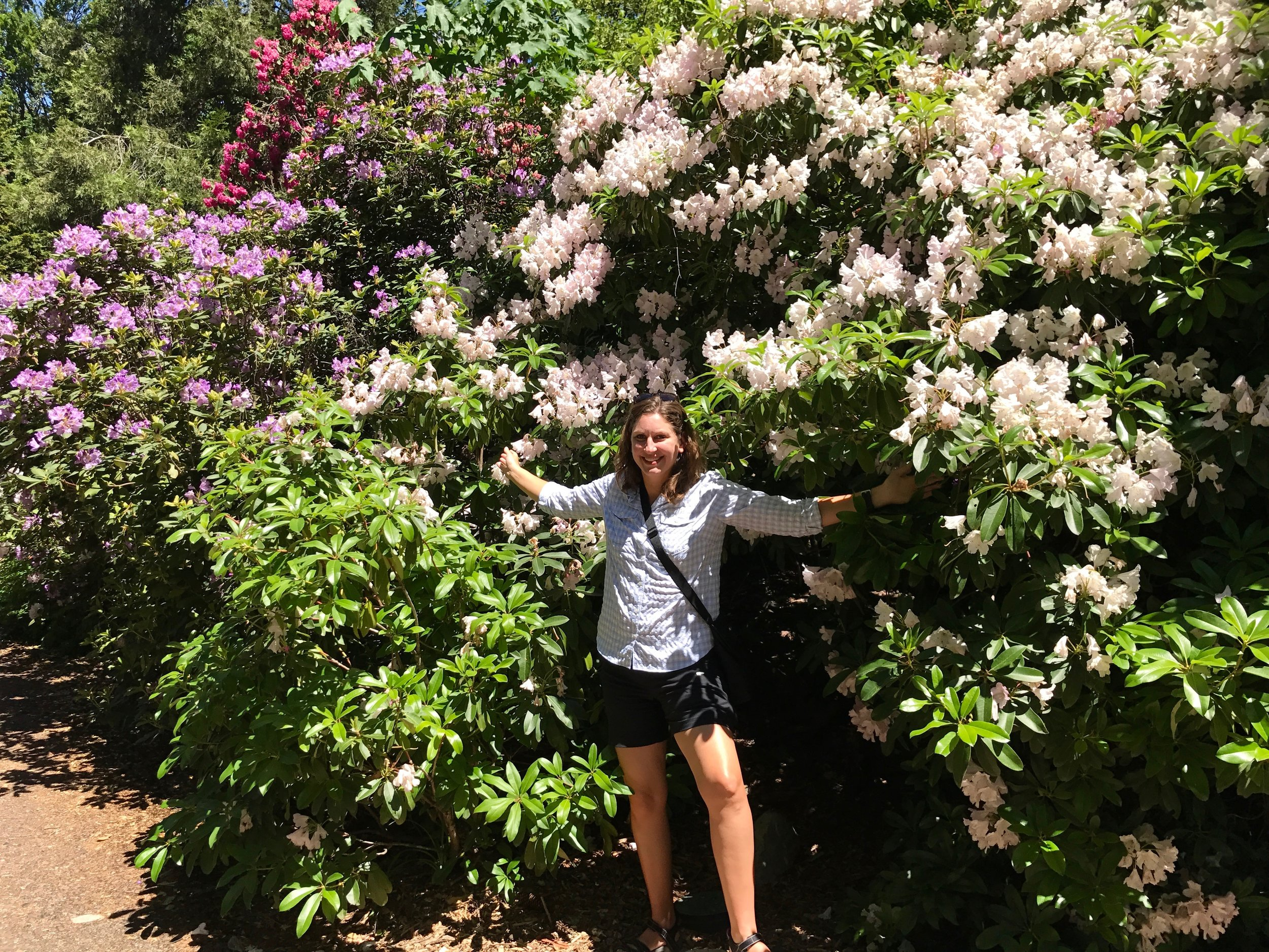 Teressa in Lithia Park's giant rhododendrons