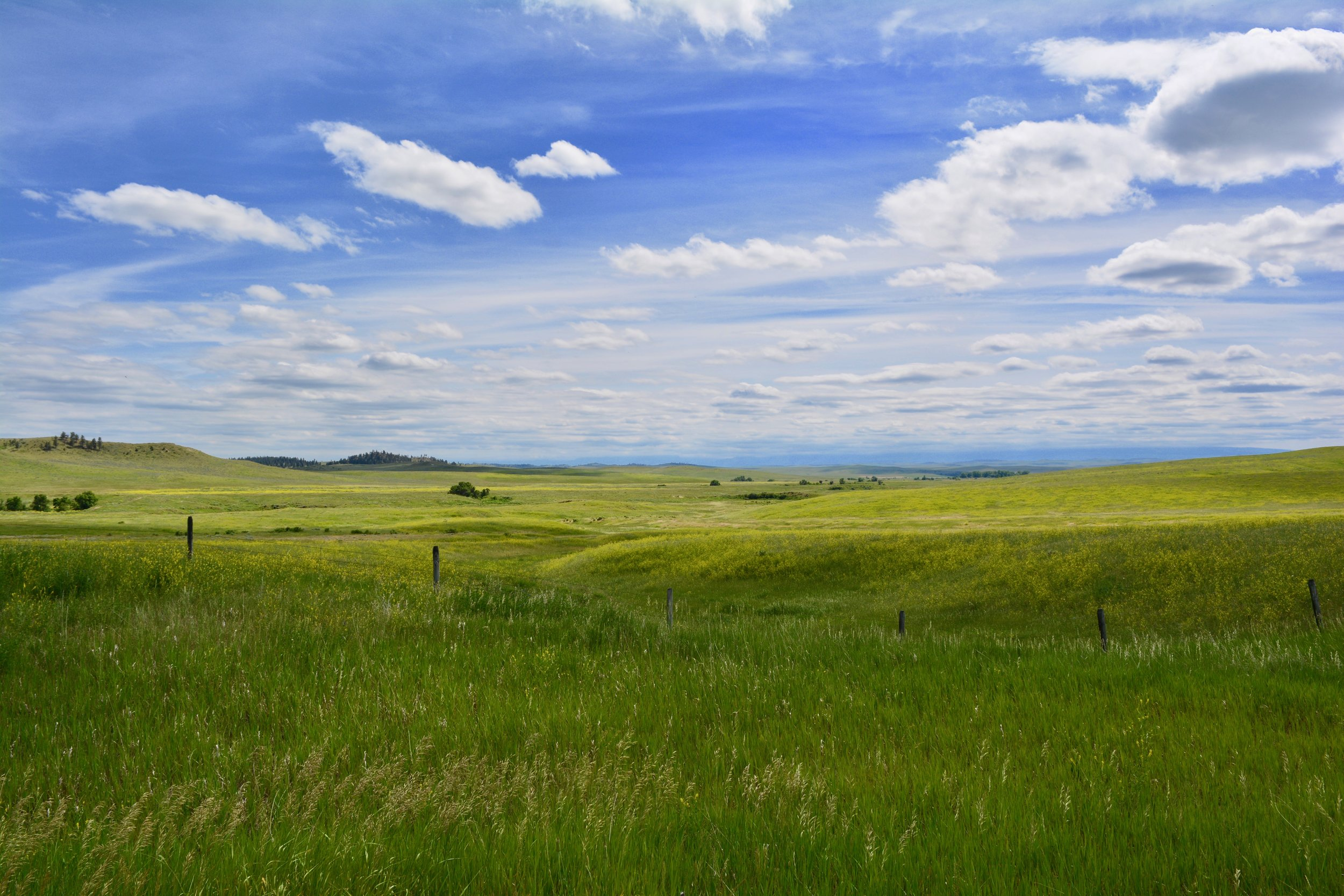 The amazingly bright green hills near Garryowen, Montana