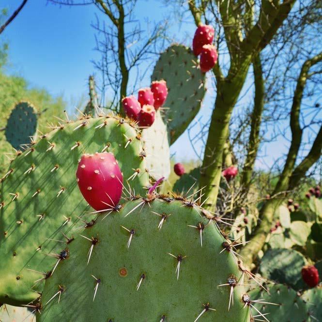 Tucson_AZ_090517_094803.jpg