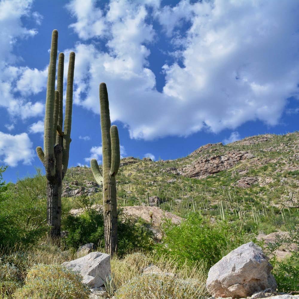 Tucson_AZ_090517_141255.jpg