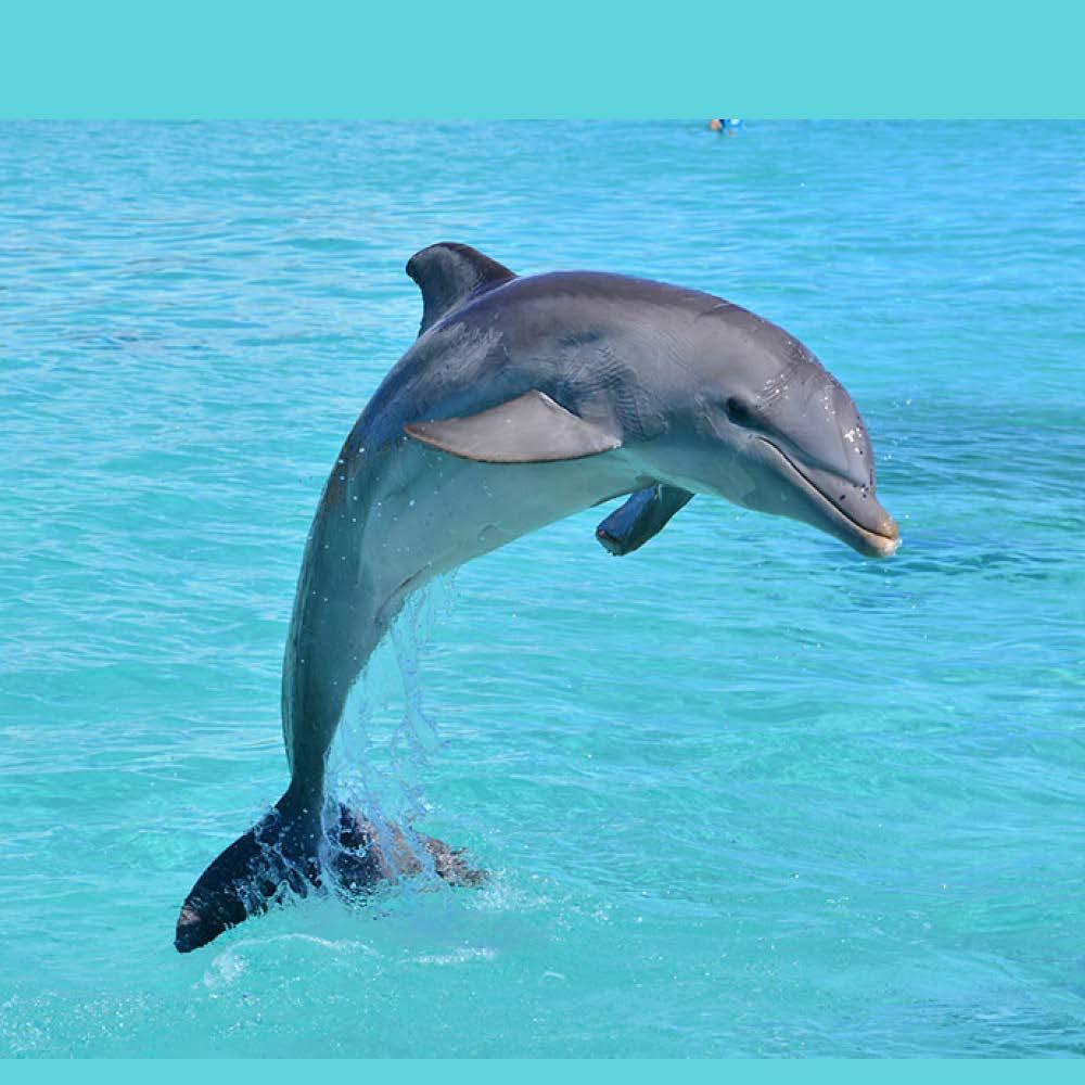 DolphinForSarah.jpg