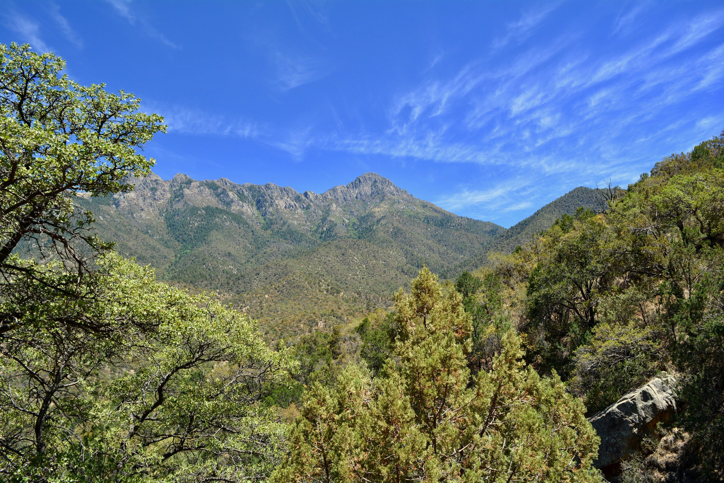 View from the trail at Madera Canyon