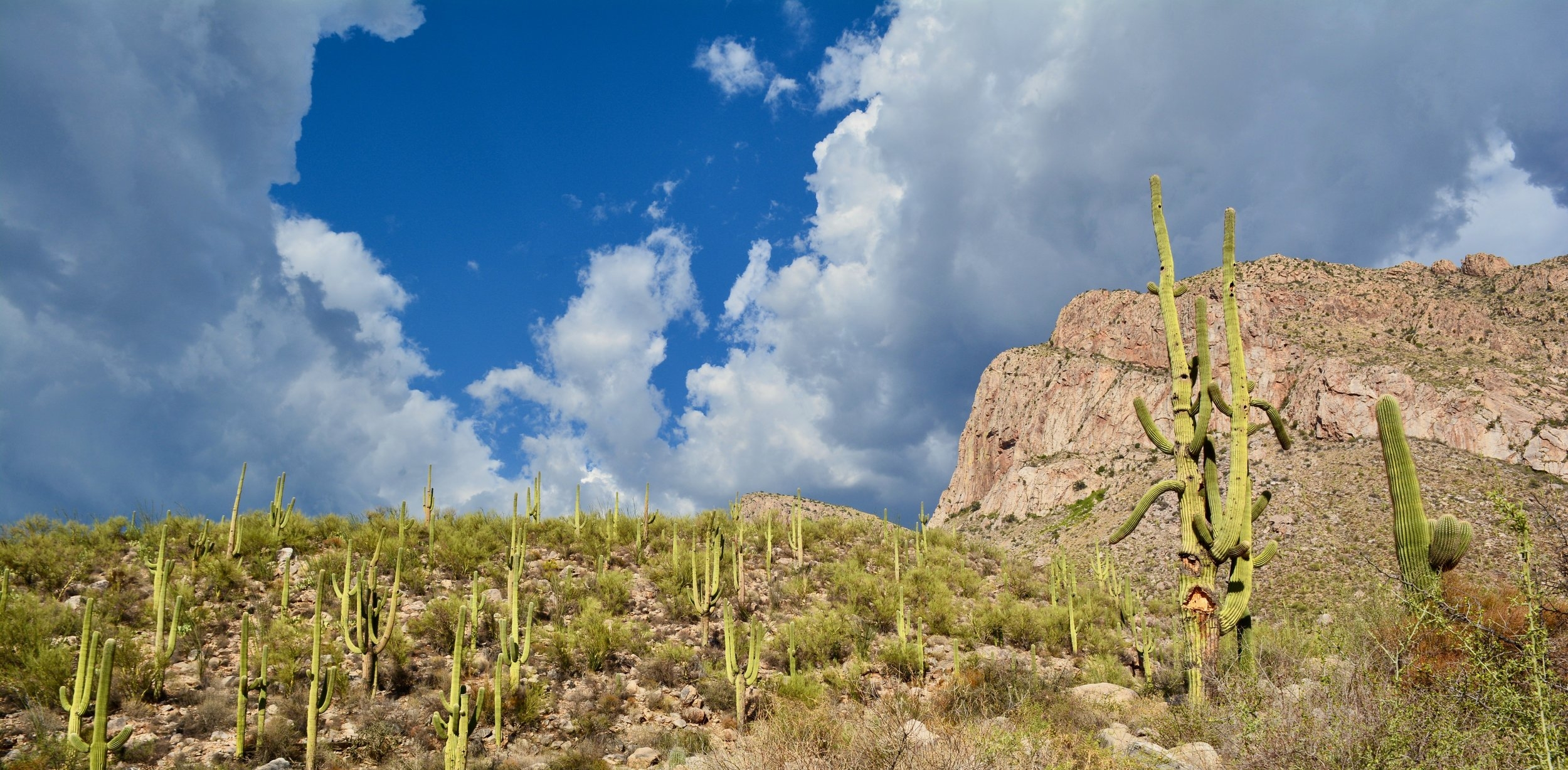 Monsoon beauty on Linda Vista Trail in Oro Valley, Arizona