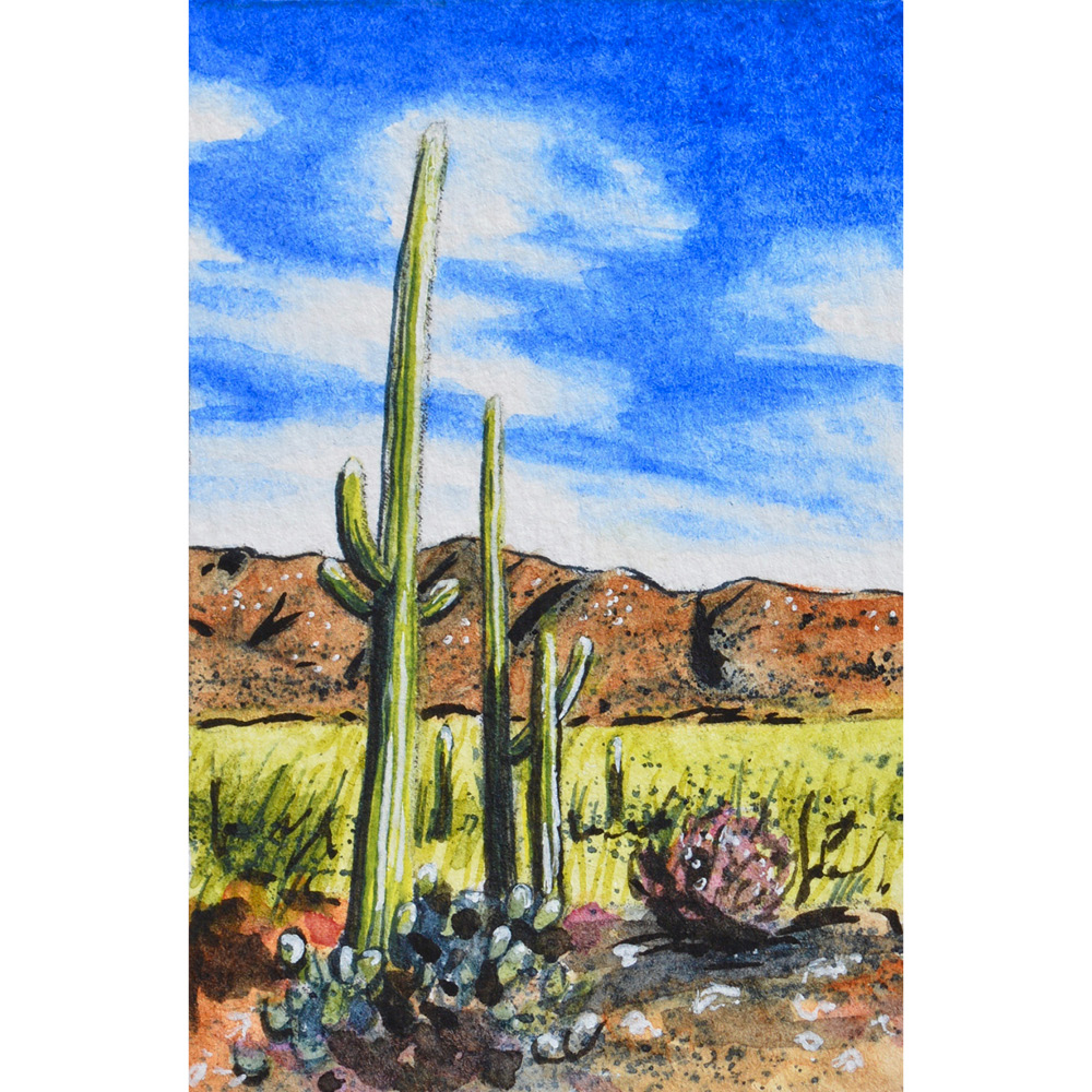 """Saguaro National Park West, Tucson, Arizona: 11/4/17, 15:00:47""  For sale  as of this blog posting"
