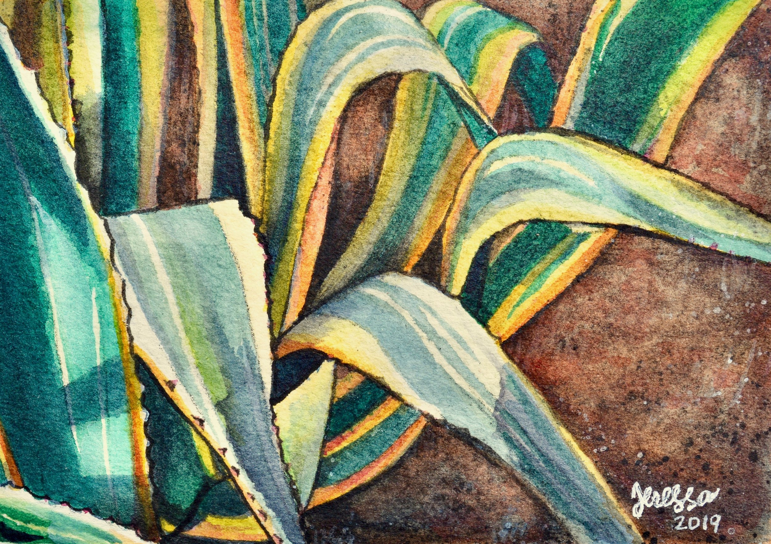"""White-Striped Agave Study""  For sale as of this blog posting  5x3.5"""