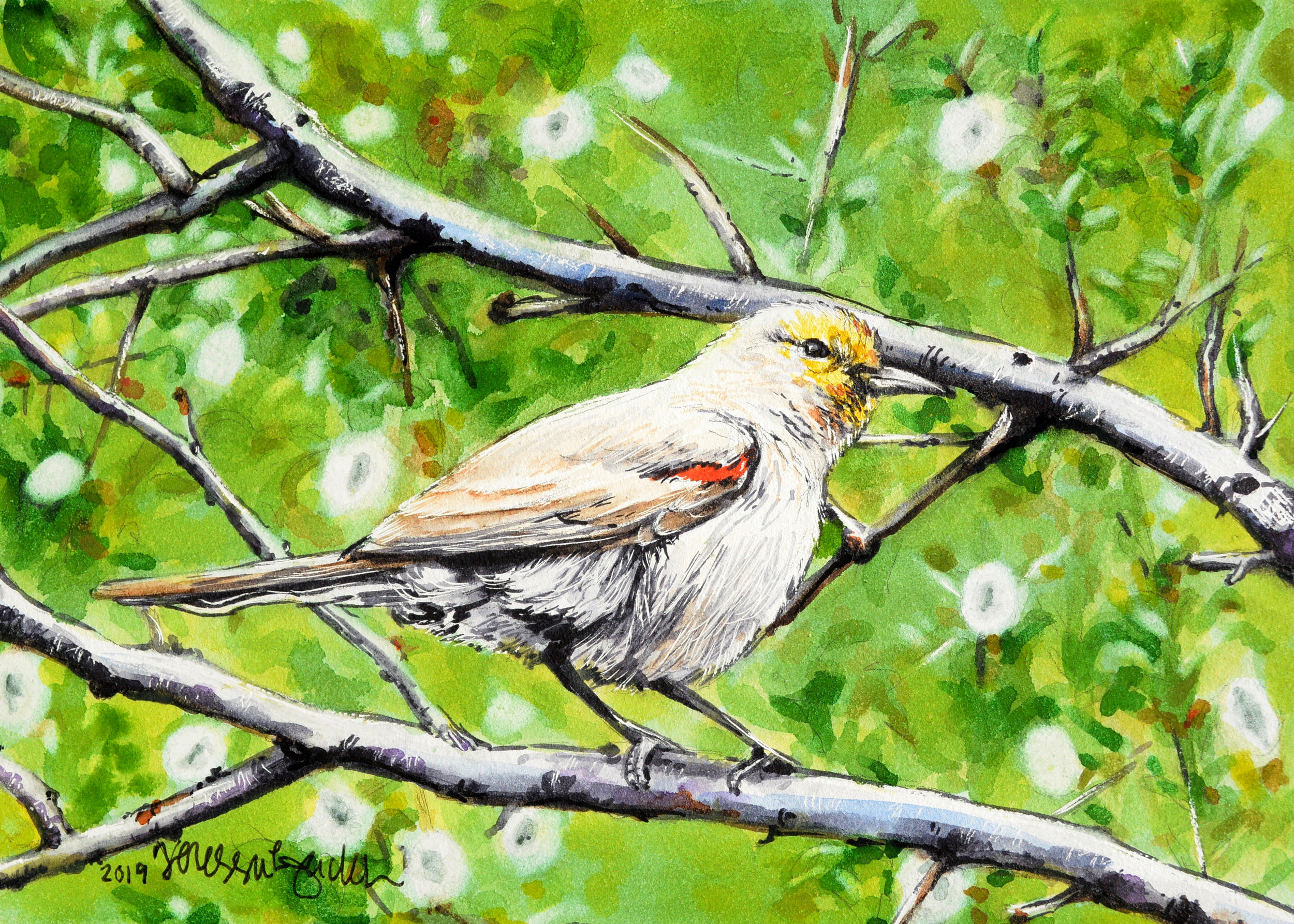 """Verdant Verdin"" 5x7"" on Aquabord For sale as of this blog posting -  visit my online shop  to purchase."