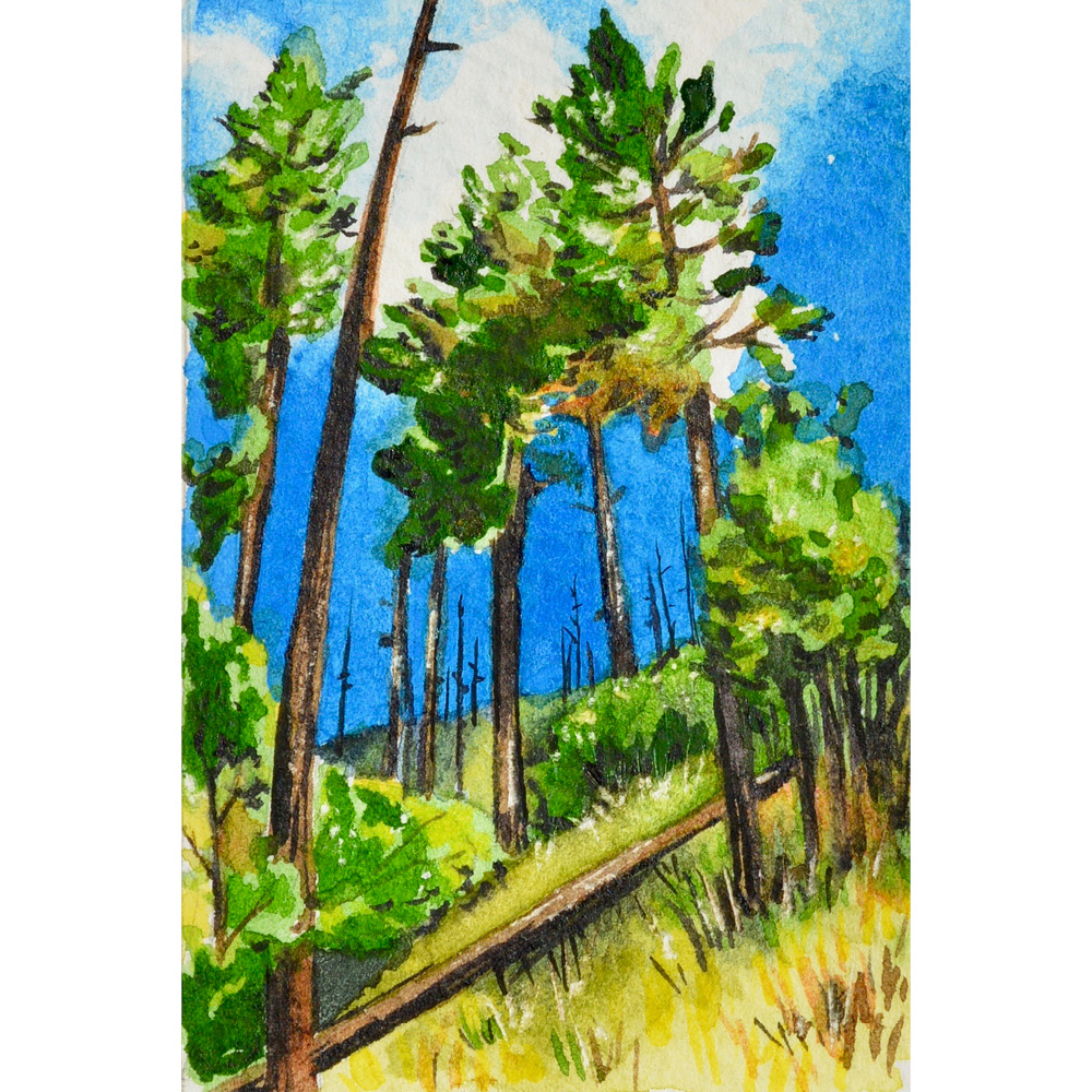 """The Giants of Marshall Gulch"" 2x3"" watercolor on Fabriano 300 lb. paper For sale as of this blog posting -  visit my online shop  to purchase."