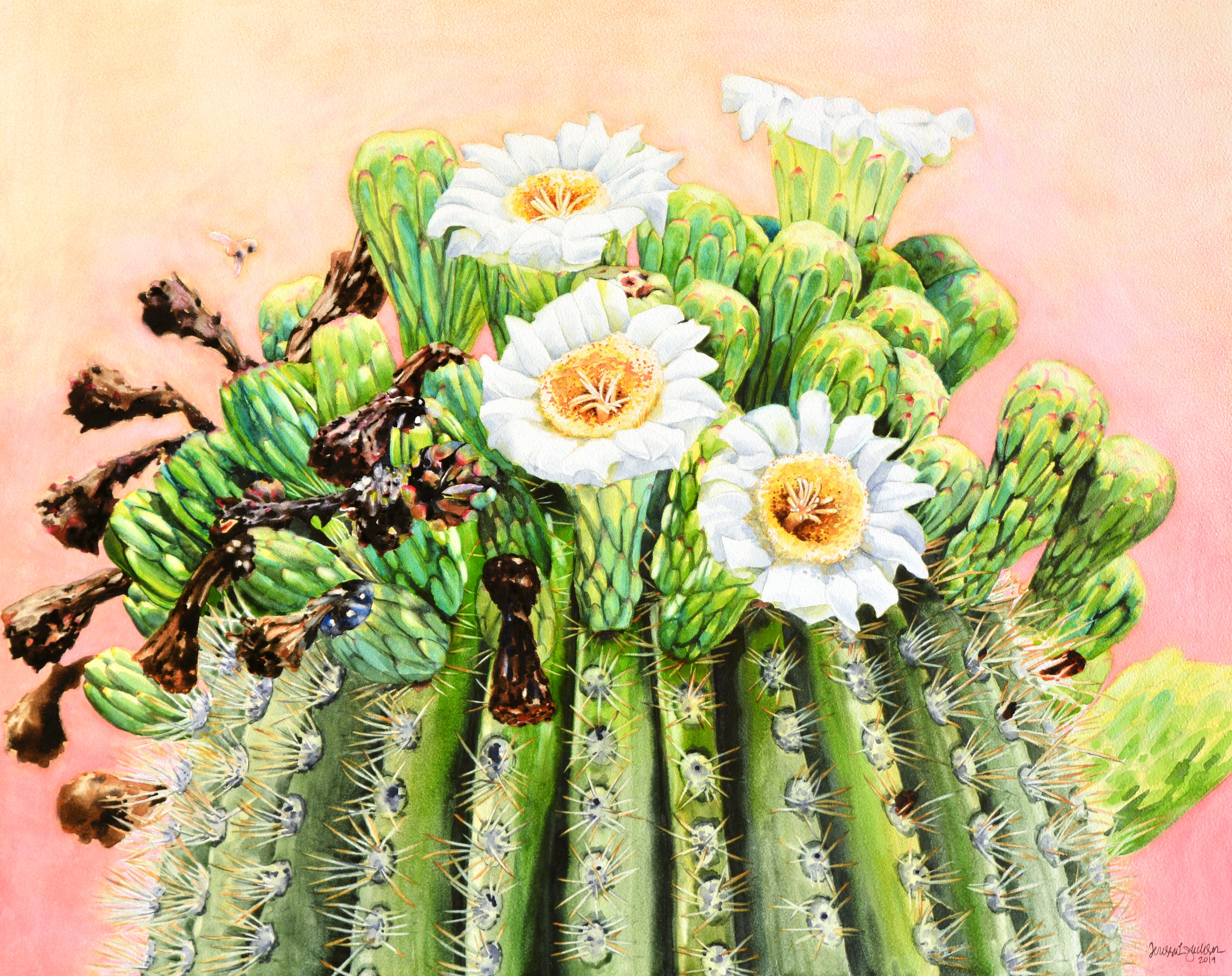 """La Corona"" 20x16"" watercolor on 2"" cradled Aquabord Available for purchase at  Southern Arizona Watercolor Guild  from 9/5-10/6/19."