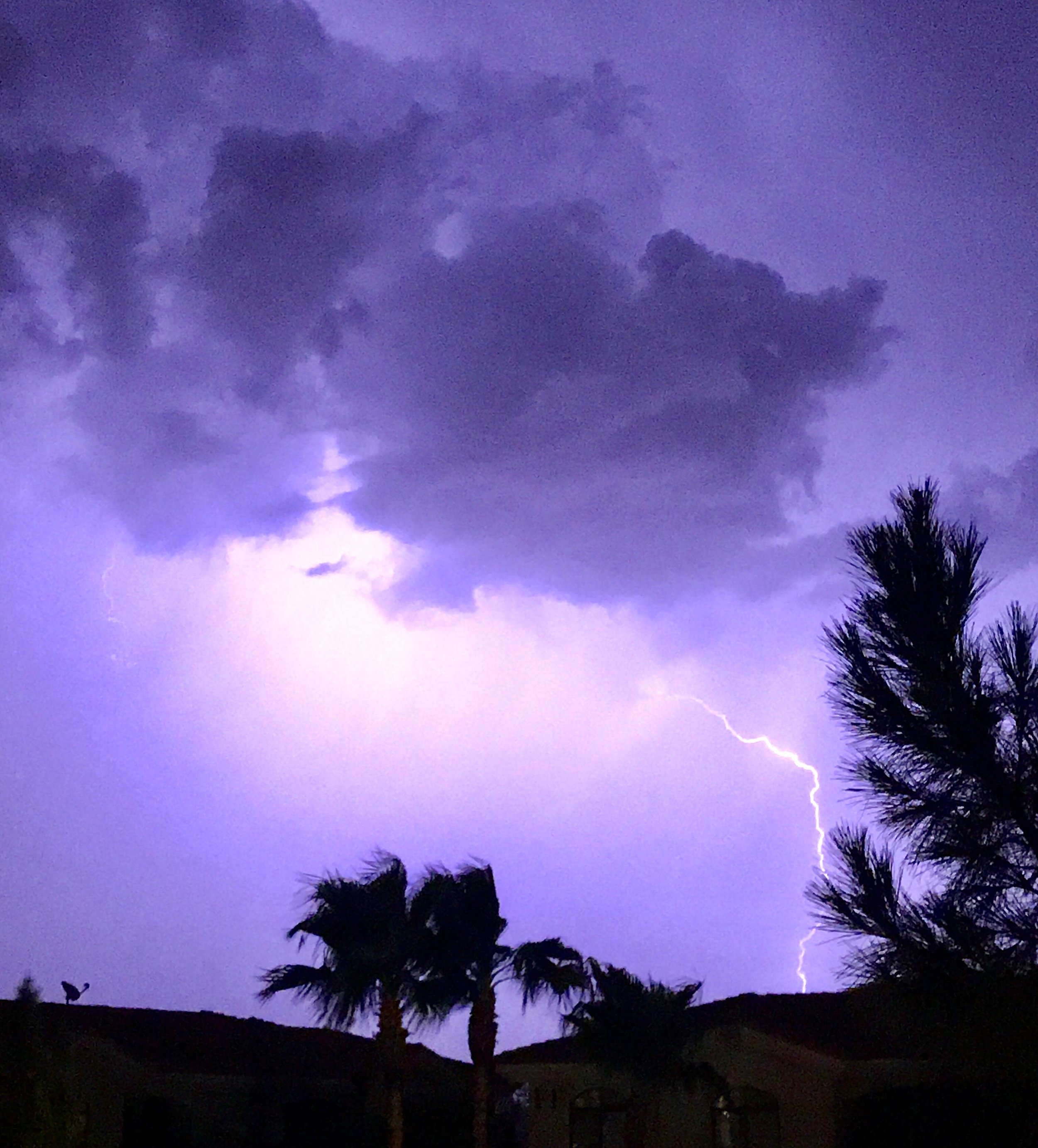 Lightning I caught during an evening monsoon shower