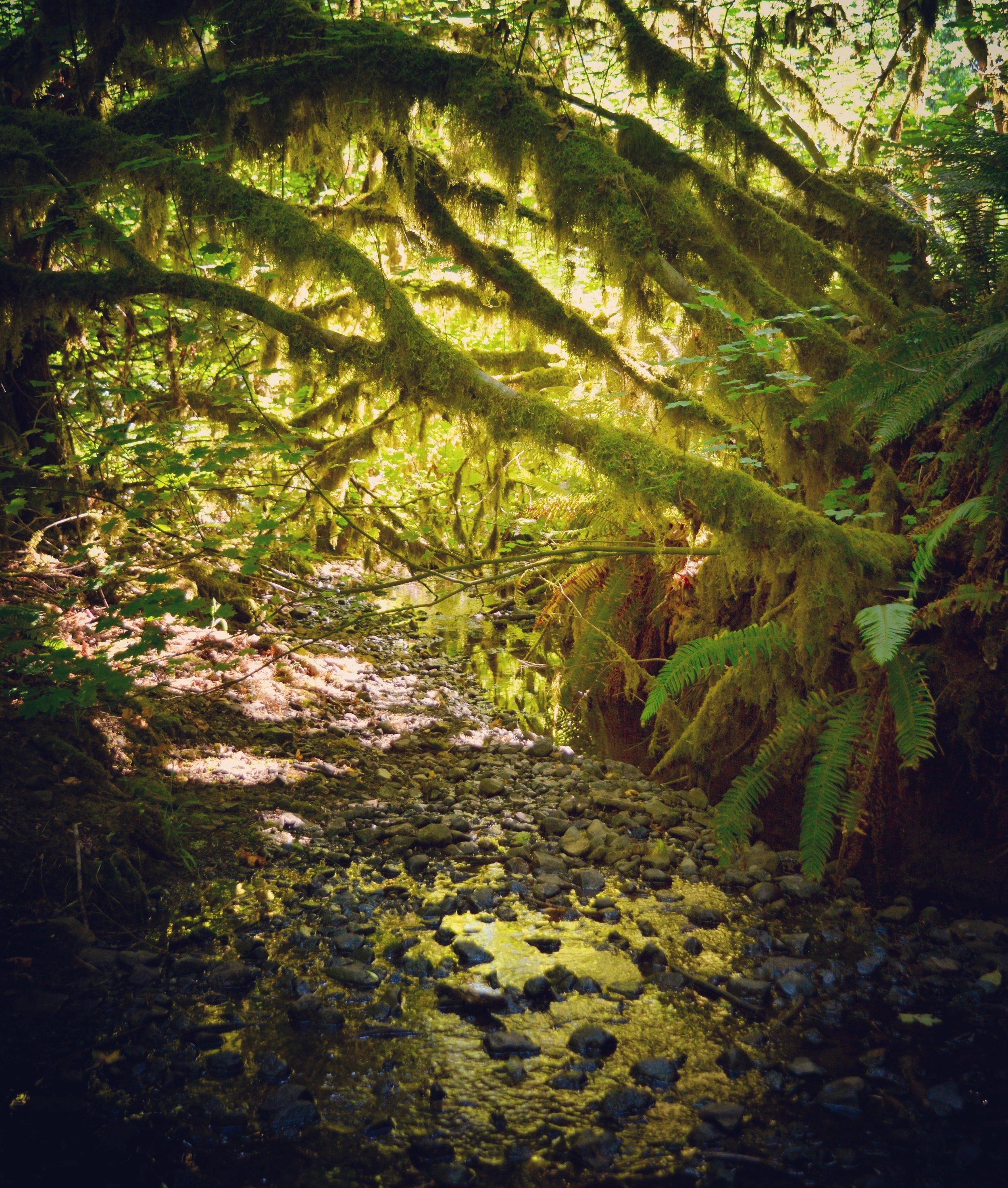 Oregon is green