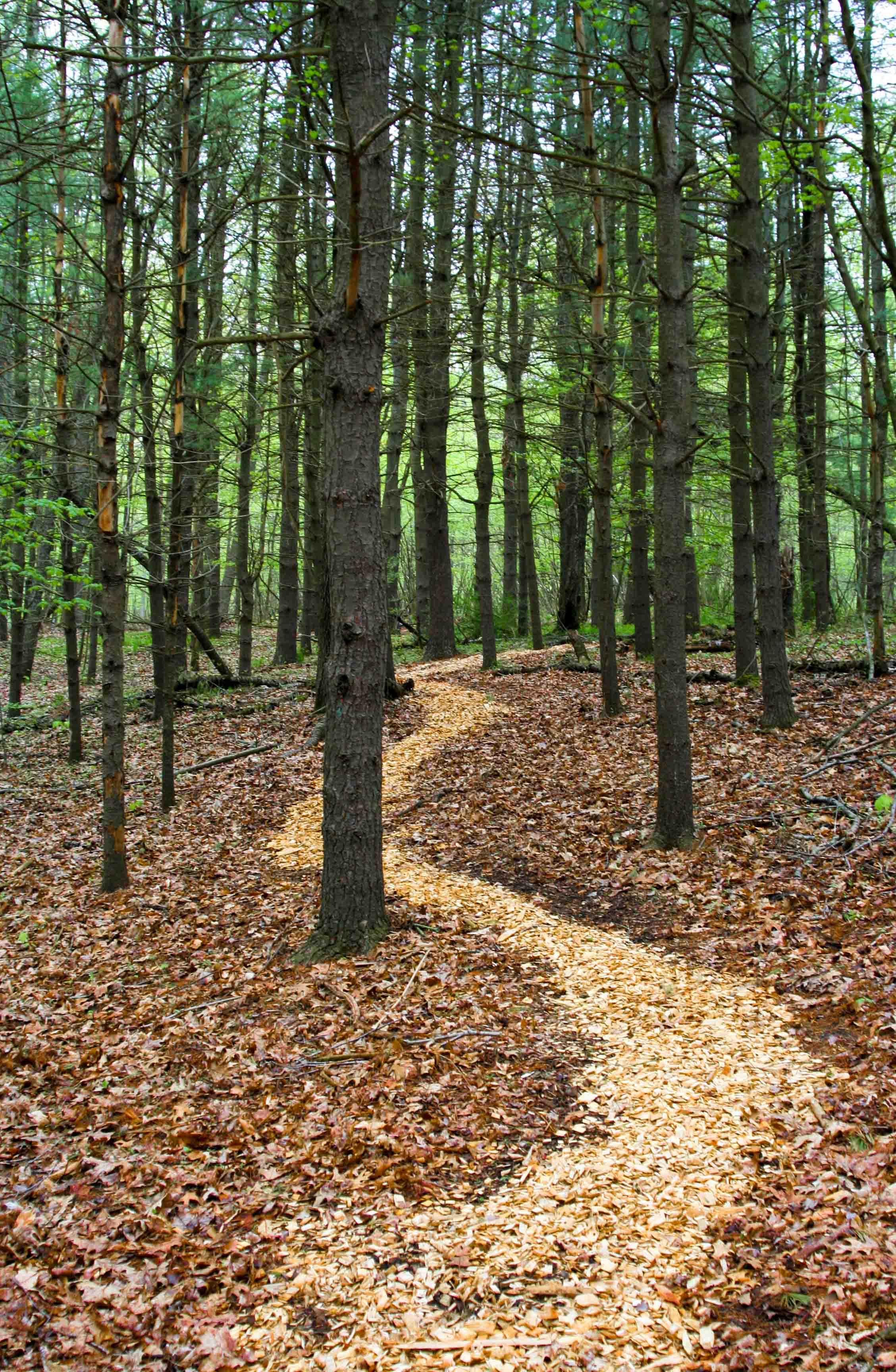 the path2-min.jpg