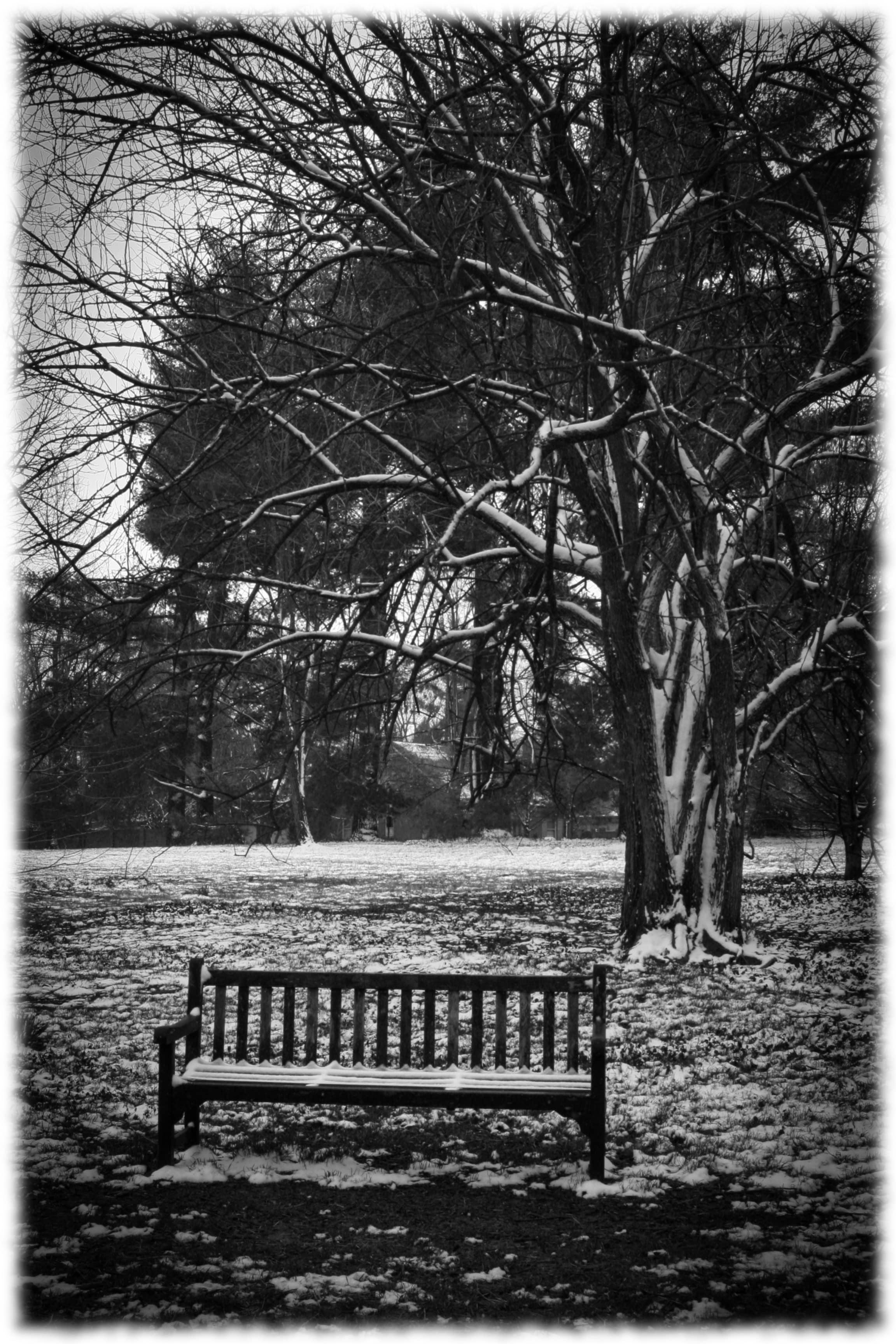Park Bench-min.jpg