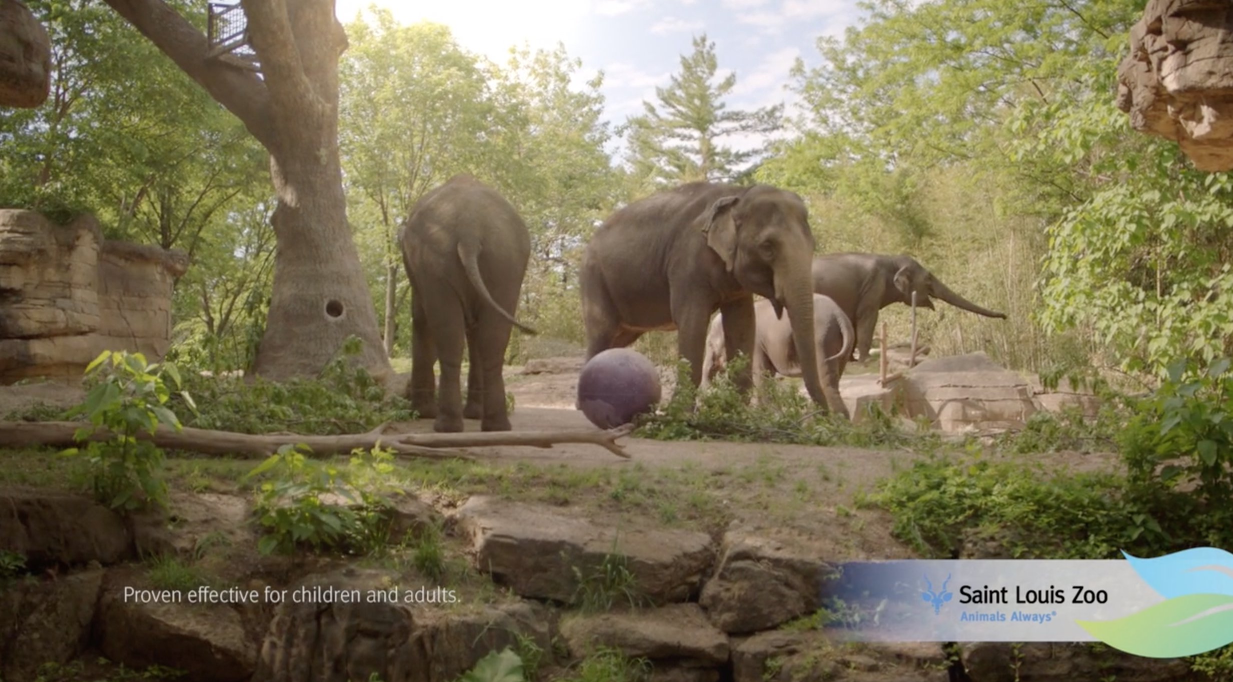 """Click to View Saint Louis Zoo - New You """"Side Effects"""""""