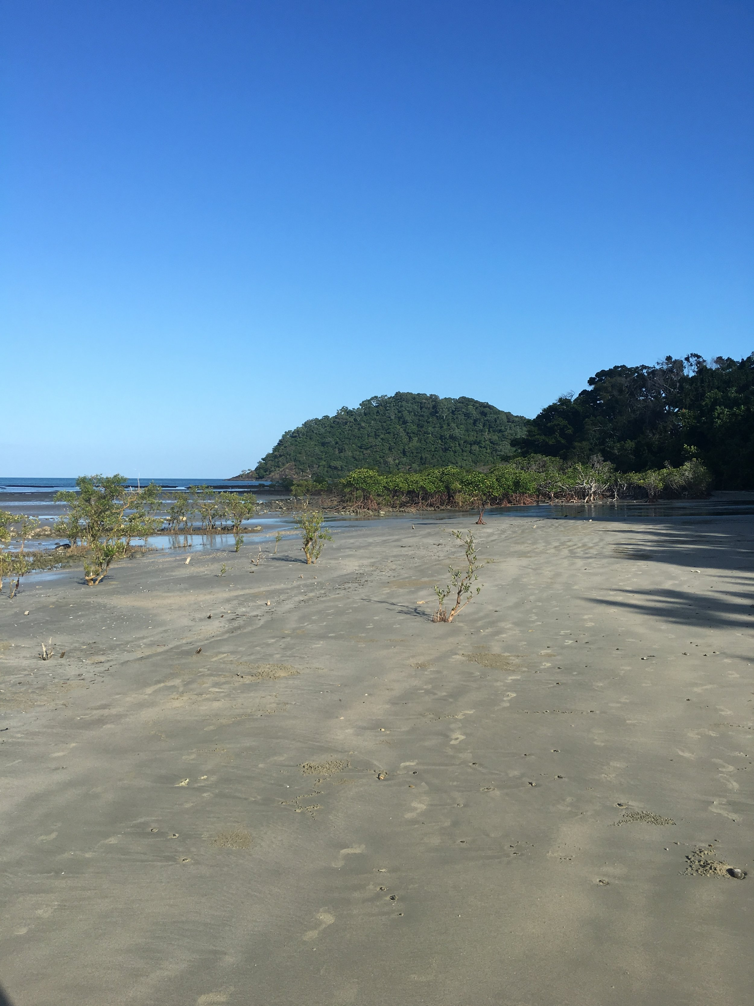 Mangroves on the Cape Tribulation beach. The tree-covered hill in the background is the cape itself.