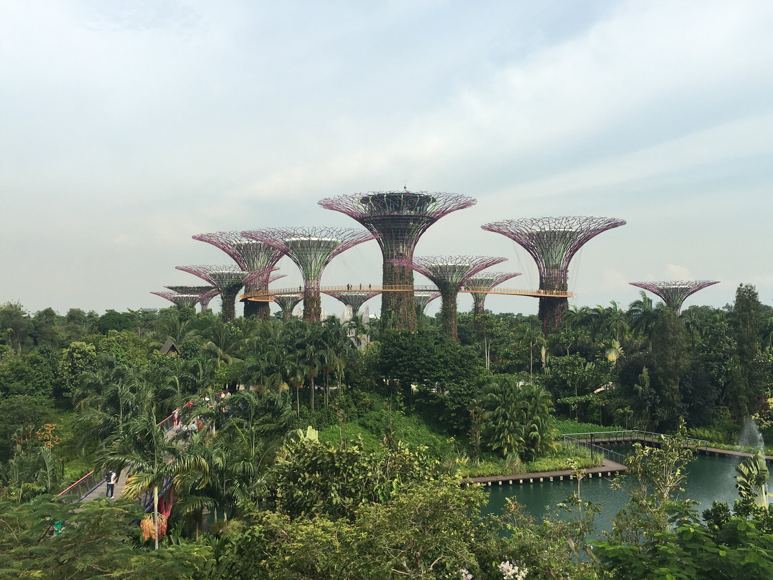 Looking over Gardens by the Bay