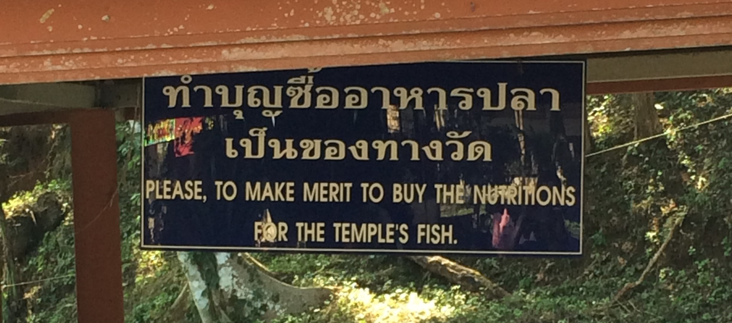 This sign was hanging by a coy pond in Chiang Dao, Thailand. I thought it was well said. In order to buy the nutritions, you first must make merit. If only I knew how to make merit. Chiang Dao, Thailand.