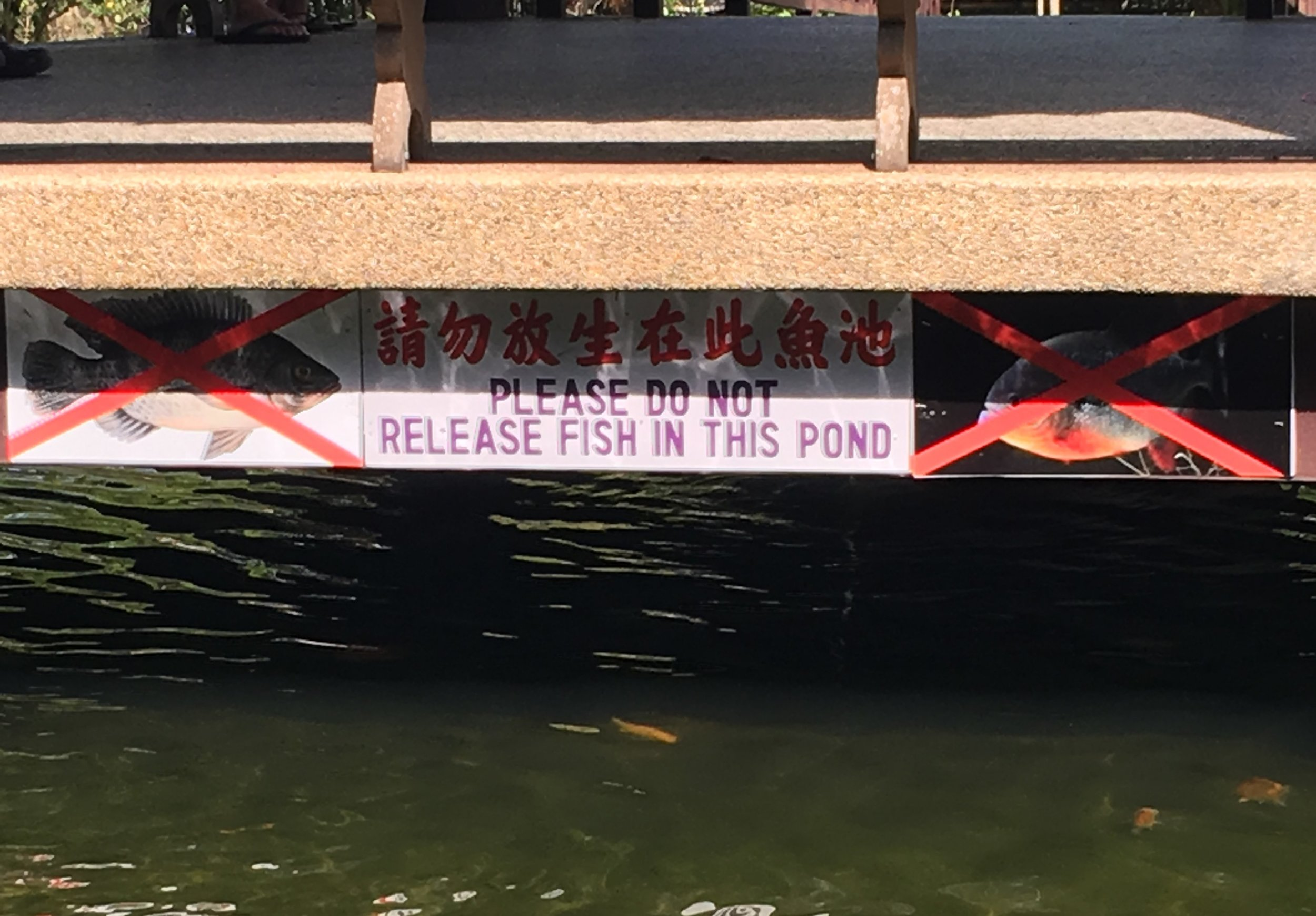 Well, where am I supposed to release my fish then?! Penang, Malaysia.