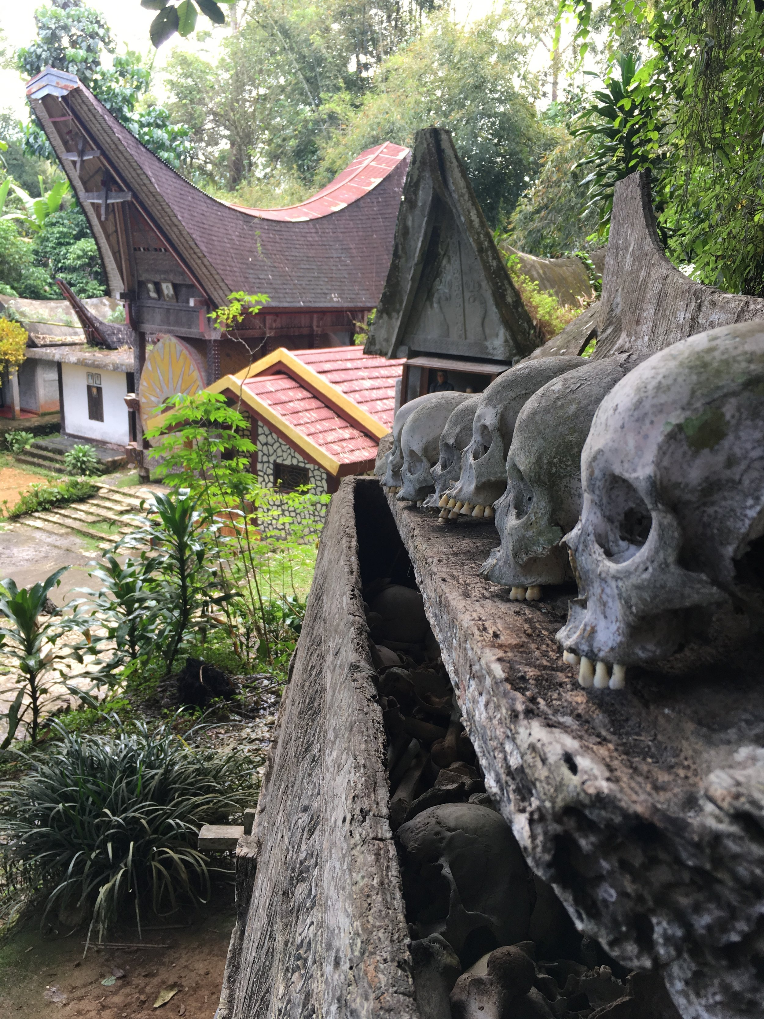 A Bloody, Morbid, and Hospitable Experience in Tana Toraja