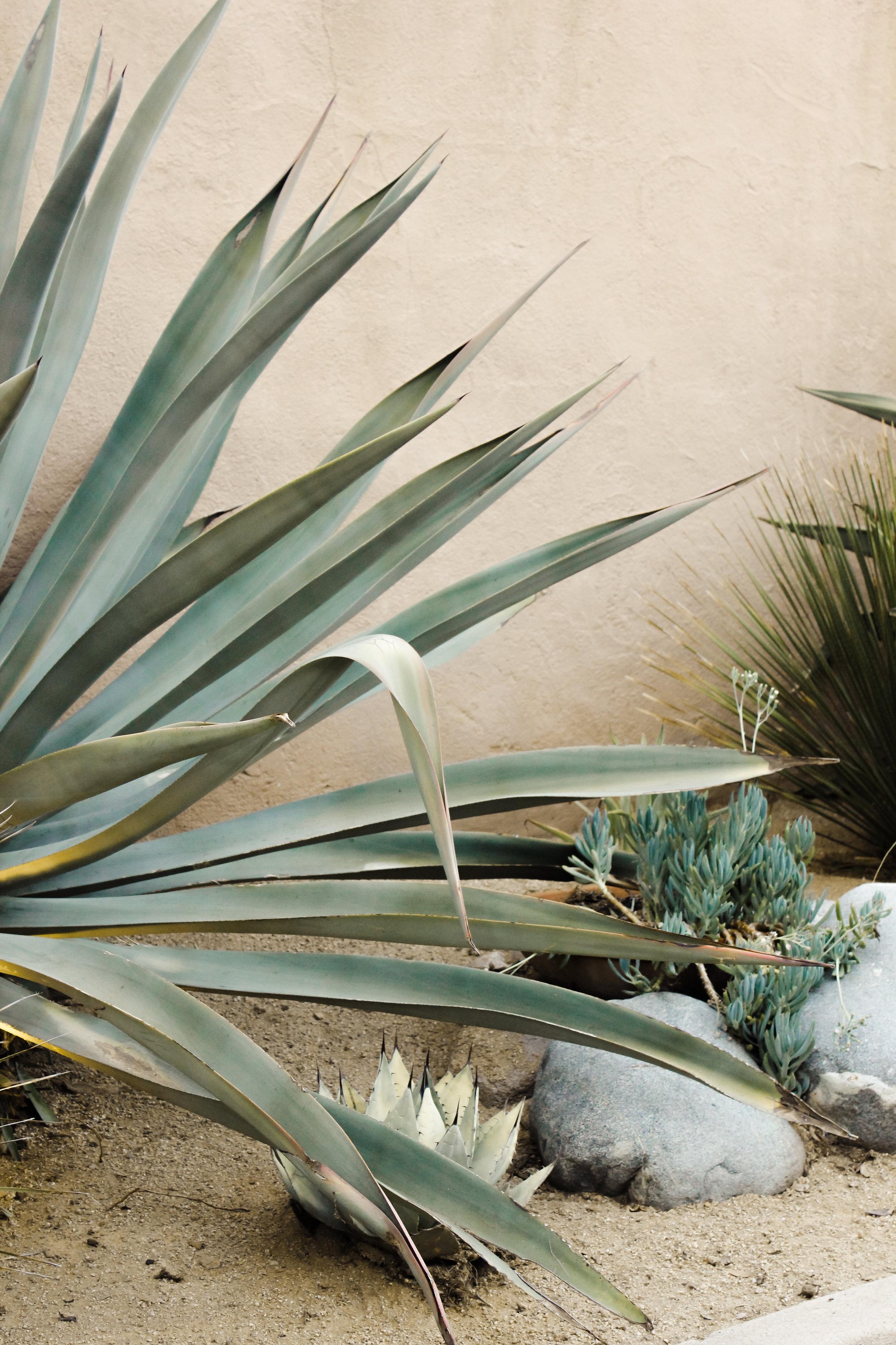 caitlin_miyako_taylor_succulent_plant_pink_wall