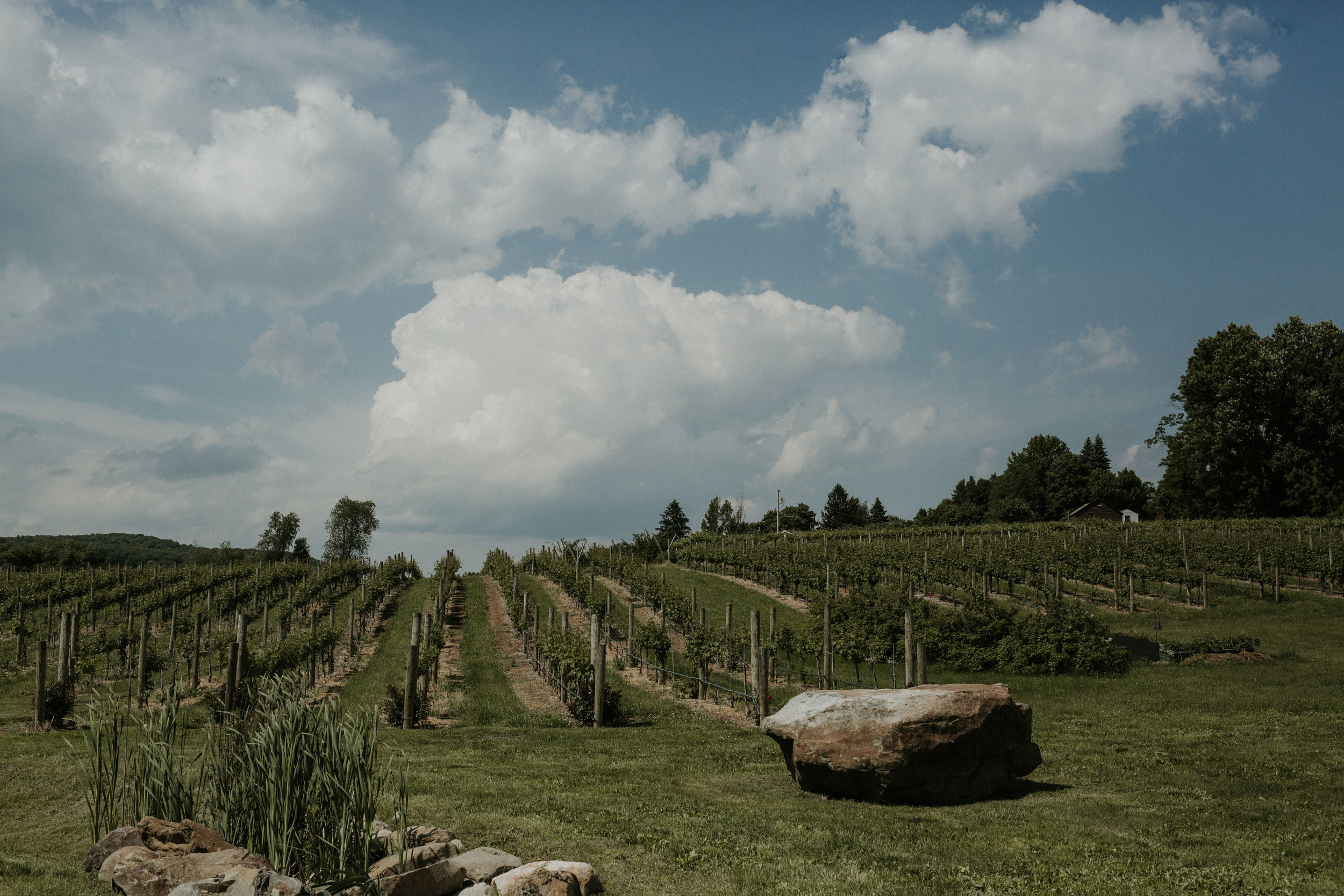 nostrano_vineyards_wedding_0029.JPG