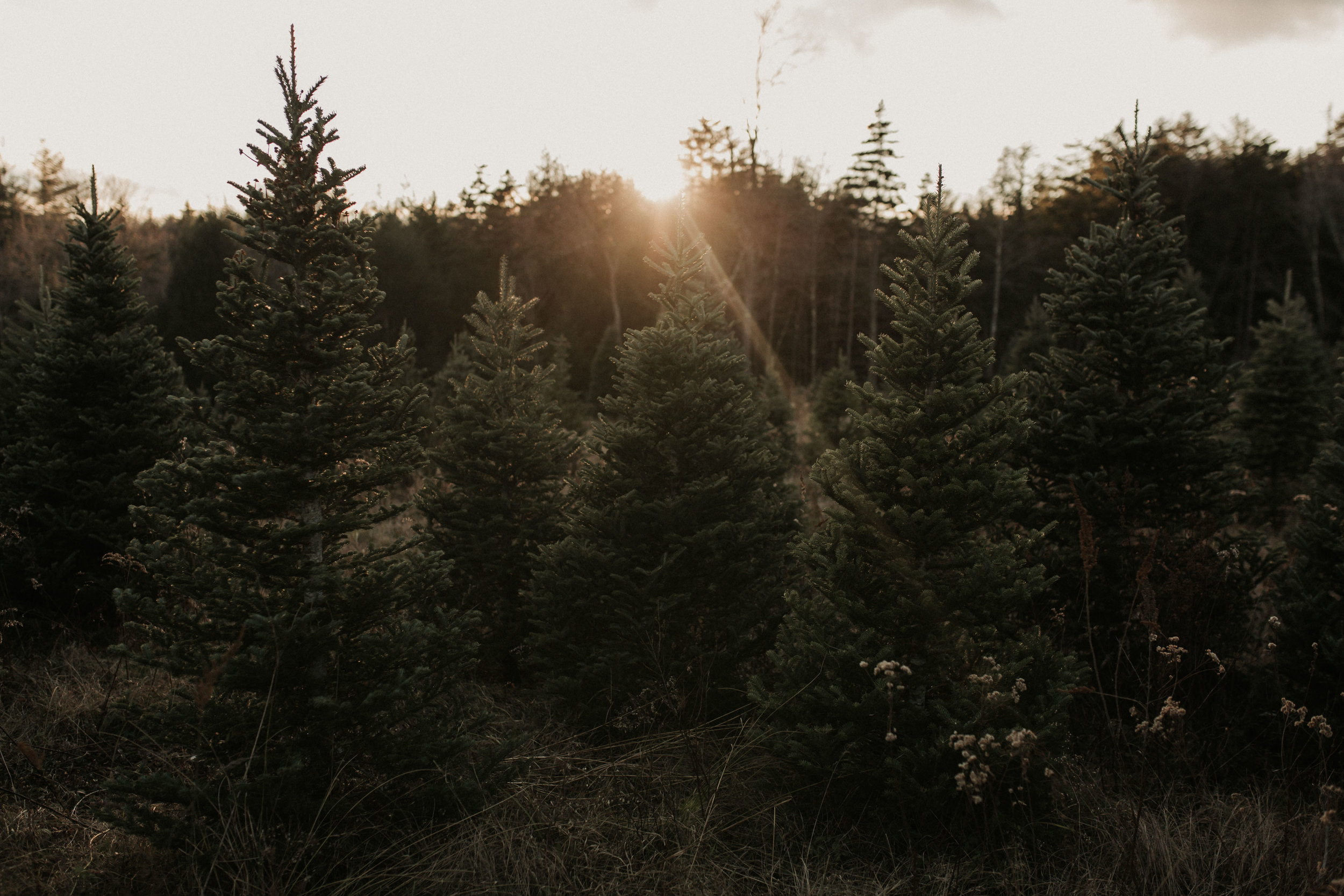 christmas_tree_farm_engagement_shoot_009.JPG