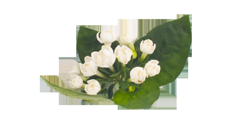 lanxel-flower.png
