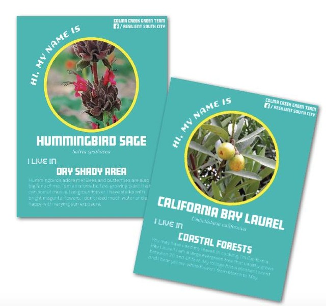 Toolkit Feature: Native Plant Playing Cards (@Hassellplus) . @hassellplus worked with their partner @sanbrunomountainwatch to create playing cards with information about plants native to the San Bruno Mountain and Colma Creek Watershed. They were used in print format and on social media to raise awareness in a fun, informative way. Playing cards are a method of co-creating informational materials with local community partners and combining local and scientific knowledge. . . . This tool is part of the Participation + Action + Education Toolkit. Over the next few weeks we will be sharing tools the design teams used during the Bay Area Challenge to connect with community members in order to exchange ideas, raise awareness about flooding, and motivate future champions. . These tools are designed for people who want to creatively engage their communities in planning for a resilient future. . Whether you're an educator, a park ranger, or community member, we hope this toolkit inspires you to start conversations within your communities on planning for a rising bay. . View the full toolkit at resilientbayarea.org/toolkit (or link in bio) . #resilientbayarea