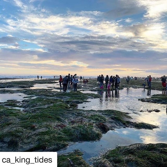 "#Repost @ca_king_tides with @get_repost ・・・ #KingTides are happening January 20 & 21! ""Don't miss these extreme high and low tides as they hit the coast this Sunday & Monday! Contribute to the growing interactive map and find out when to go where at california.kingtides.net come on #citizenscientists  #kingtides  #tidepools #tidepooling #optoutside #resilientbay"