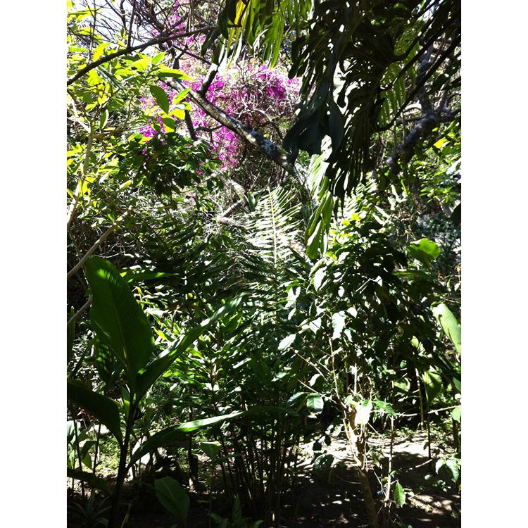 The original garden close to Lake Atitlán, Guatemala