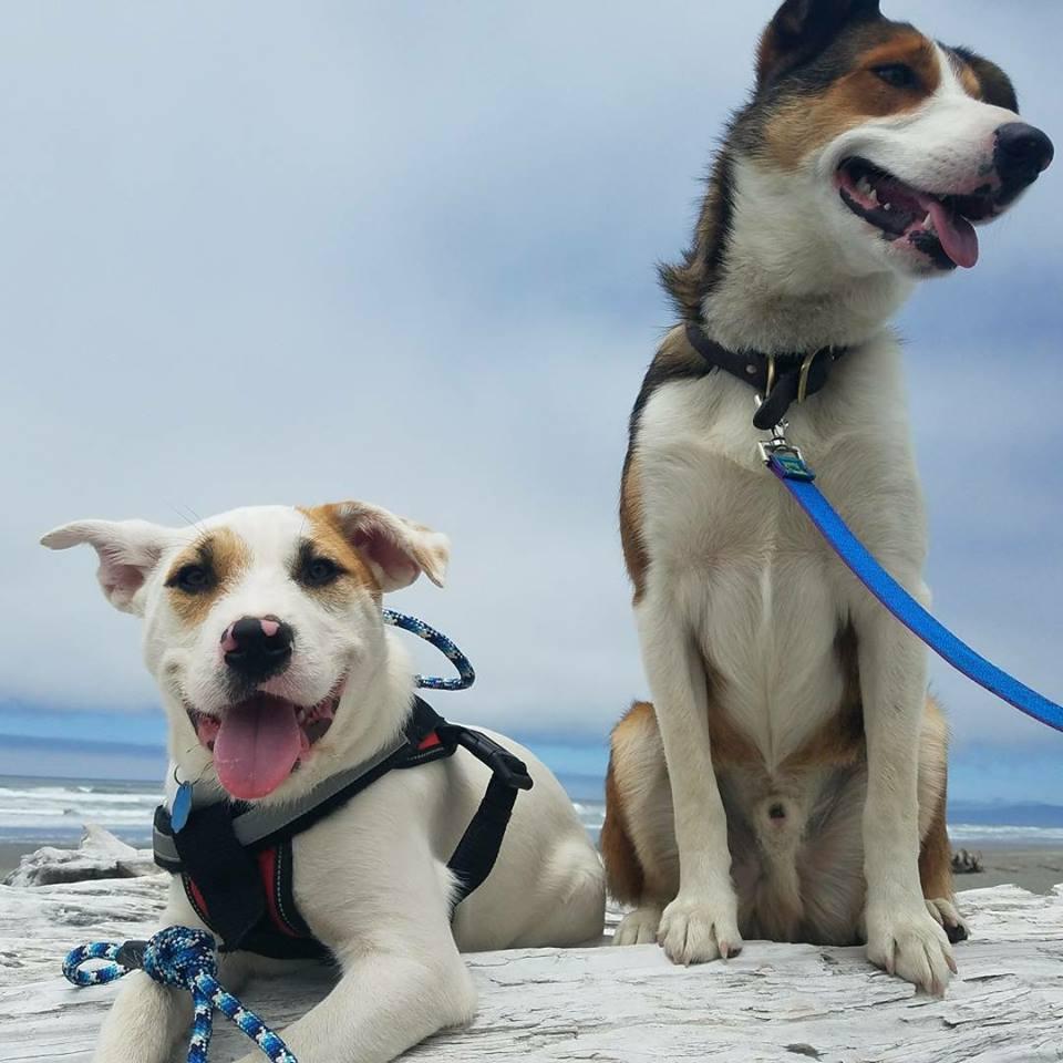 Bucky and Waylon