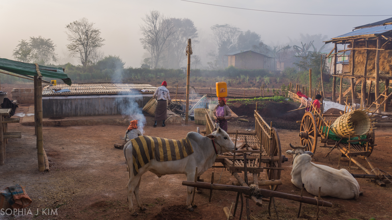 Morning Chores, Myanmar/Burma