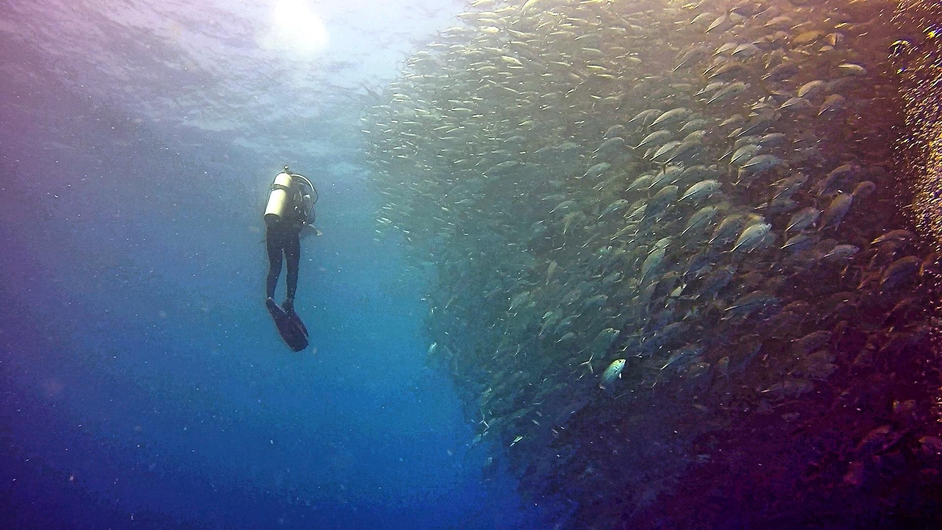 Swimming with Thousands of Jackfish, Sipadan, Malaysia