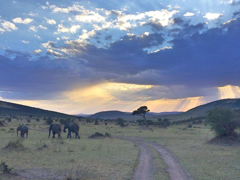 Elephants Returning Home, Masai Mara Safari, Kenya