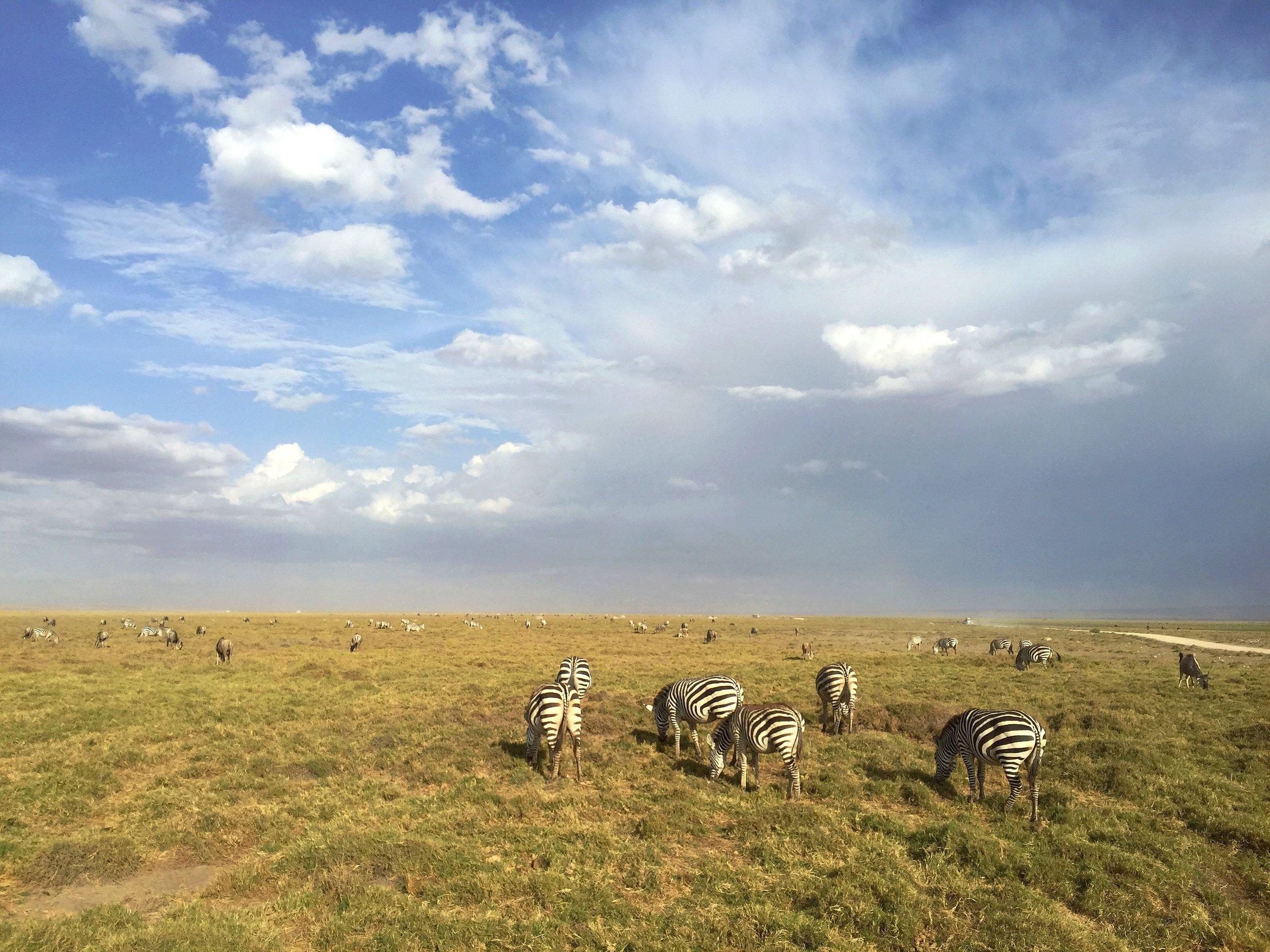 Family of Zebras, Amboseli Safari Park, Kenya