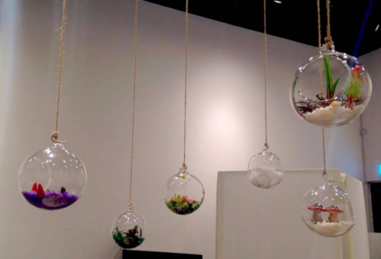 Hanging-Terrarium1