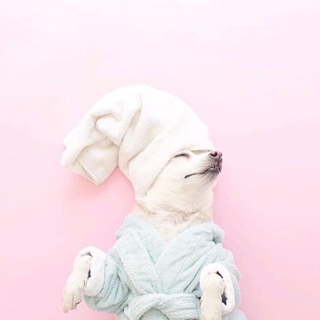 It's #nationalrelaxationday !  I hope you're embracing it like this pupper 🧖🏽‍♀️✨Image via @womeninbusinessclub