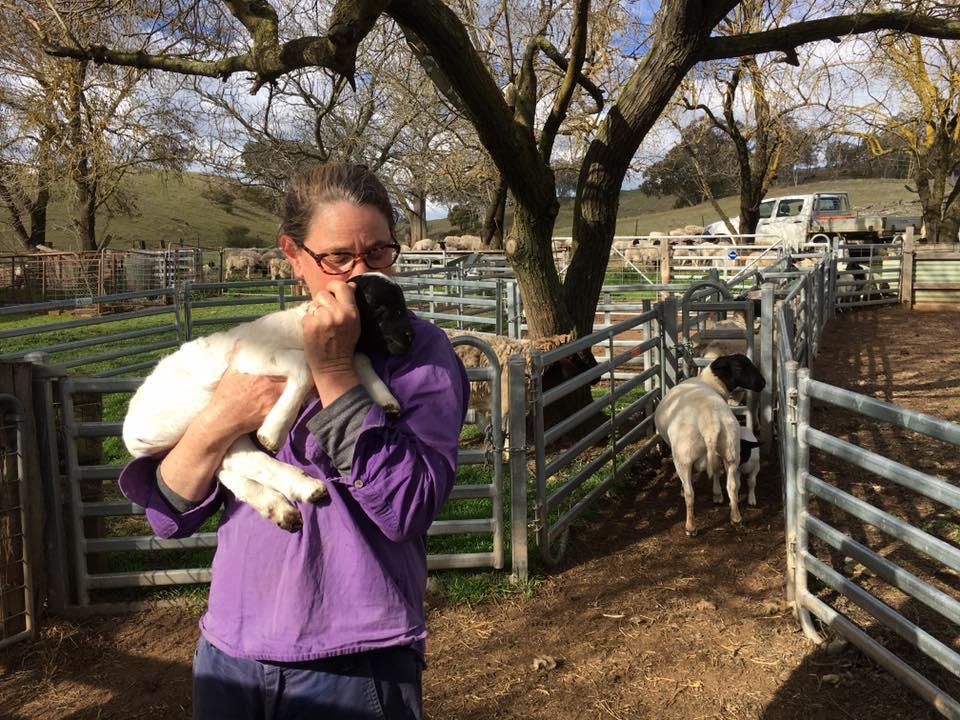 lamb hugging.jpg