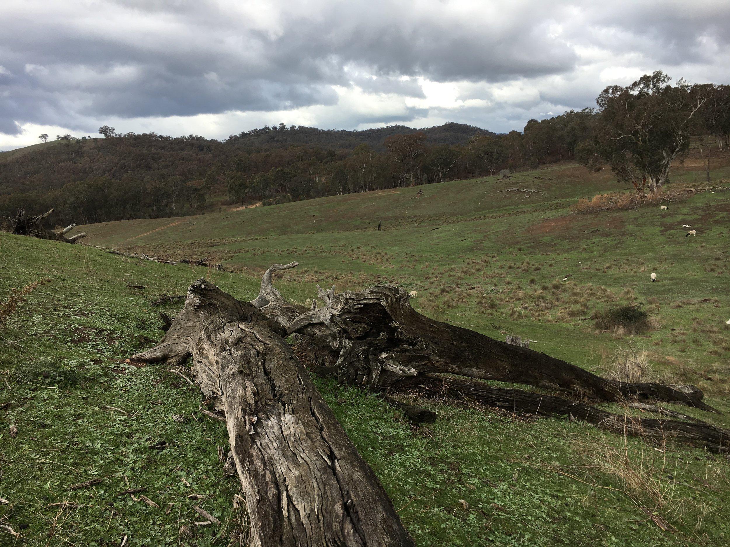 Messy fallen logs