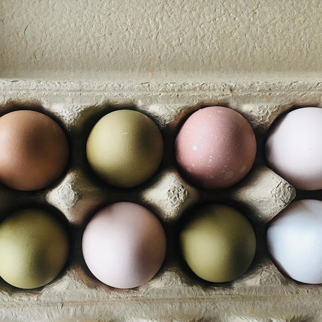 They are not laying much now in the middle of winter but they sure are laying pretty!  Our lightest boxes of eggs have the prettiest colours. The olive coloured eggs are a result of breeding my Araucanas with my French Marans.  Topping up supply today @simplywholesometumut . #hereathighfield #conservationfarming #farmingwithhabitat #smallfarm #nature #smallfarmlife #ecofarm #ecolife #farmlife #noordinarydozen #laidonstraw #blueeggs #greeneggs #knowyourfarmer #slowfarming #dorpers #dorpersheep  #gundagai #tumut #adelong #snowyvalleys #nsw #visitnsw #tourismnsw #visitriverina #visitsnowyvalleys #snowyvalleysalwaysinseason  #myriverinamurray #destinationnsw